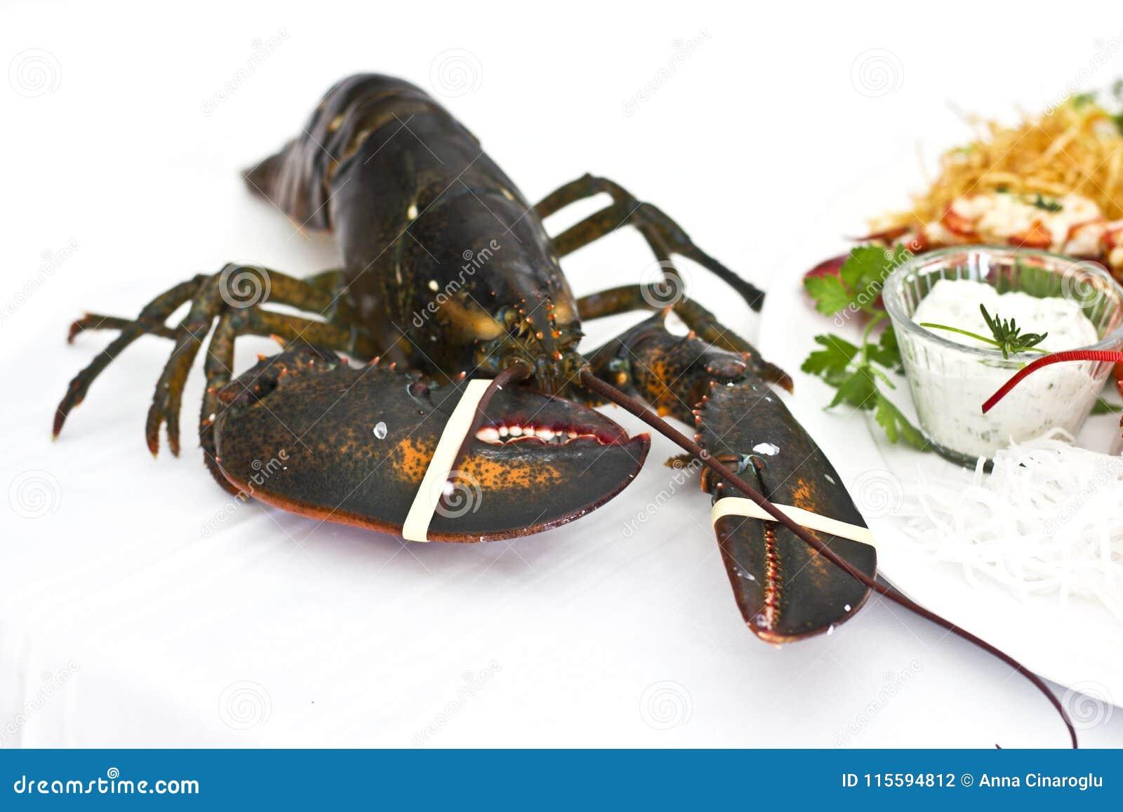 Żywy wielki homar na stole z białym tablecloth