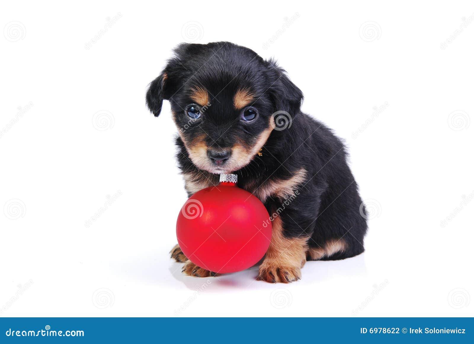 球圣诞节小狗 图库摄影图片
