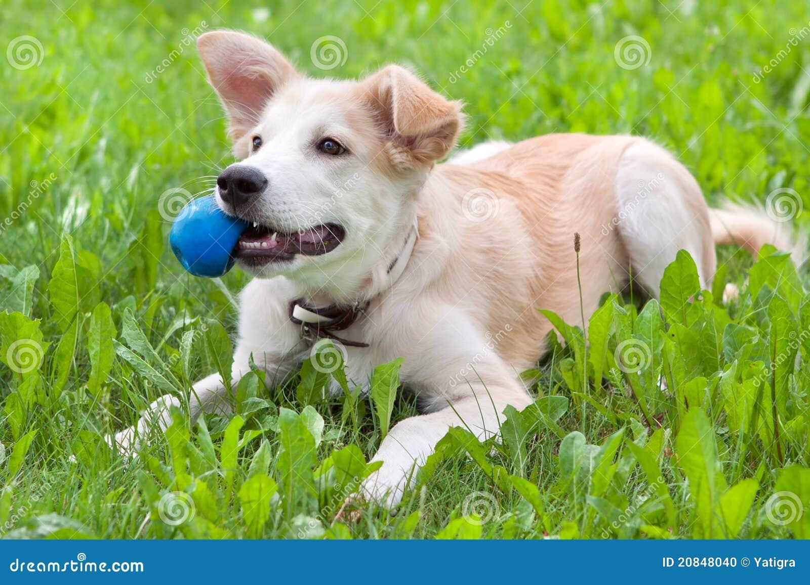 球他的小狗牙 库存照片图片