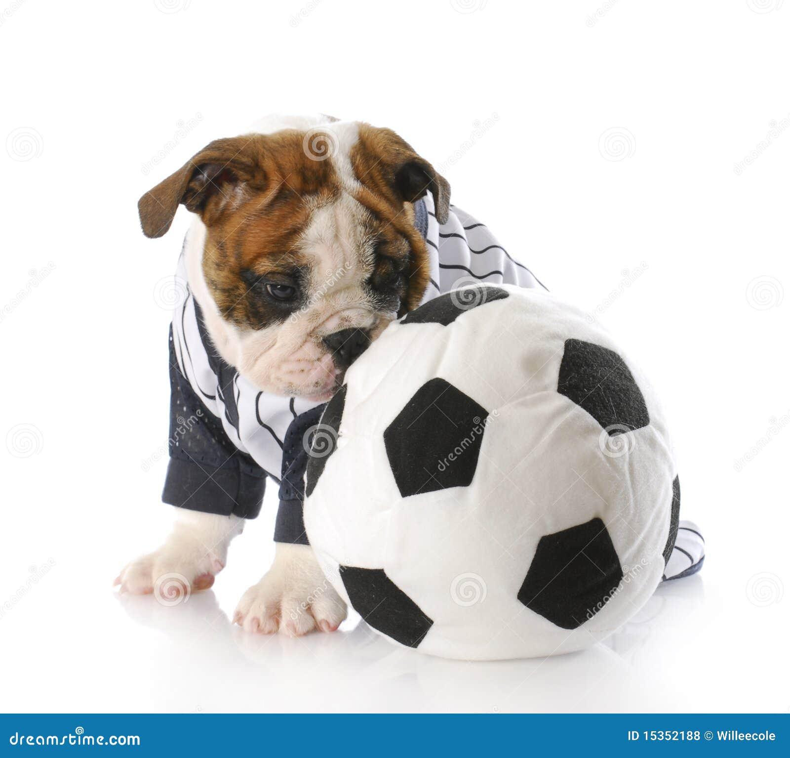 球小狗足球 免版税库存照片图片
