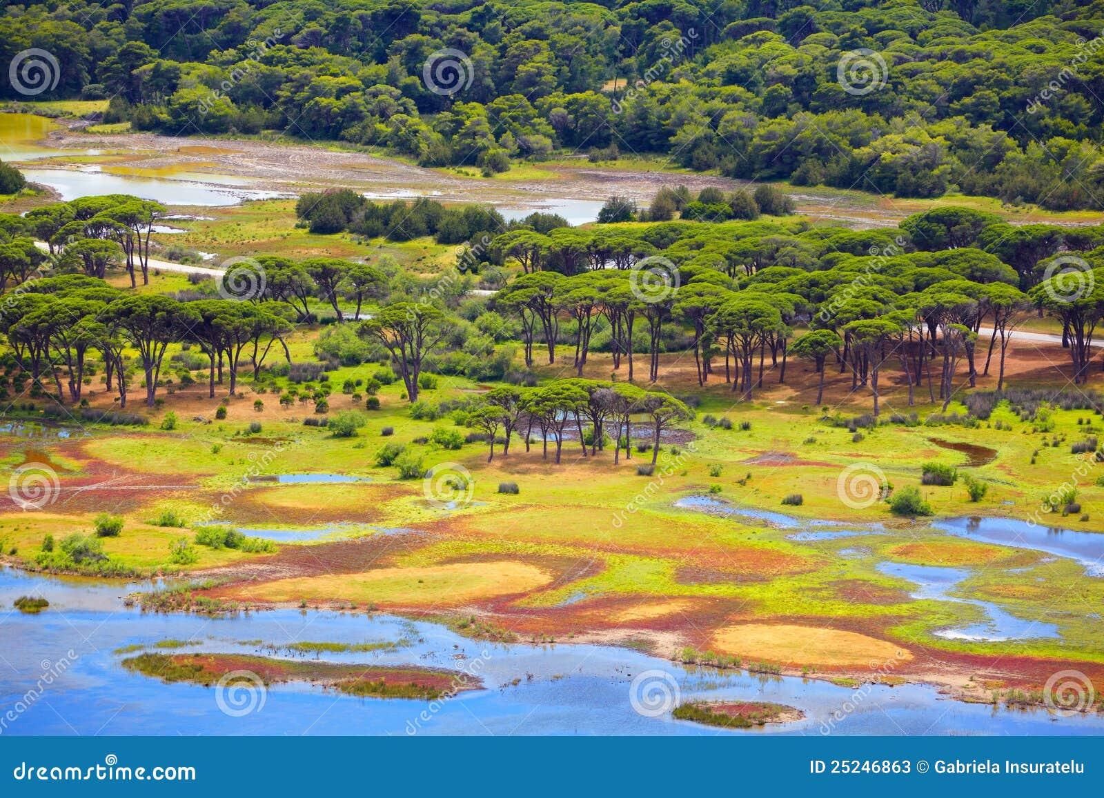森林希腊小山kalogria盐水湖mavra被看见的ori prokopos夏天.图片