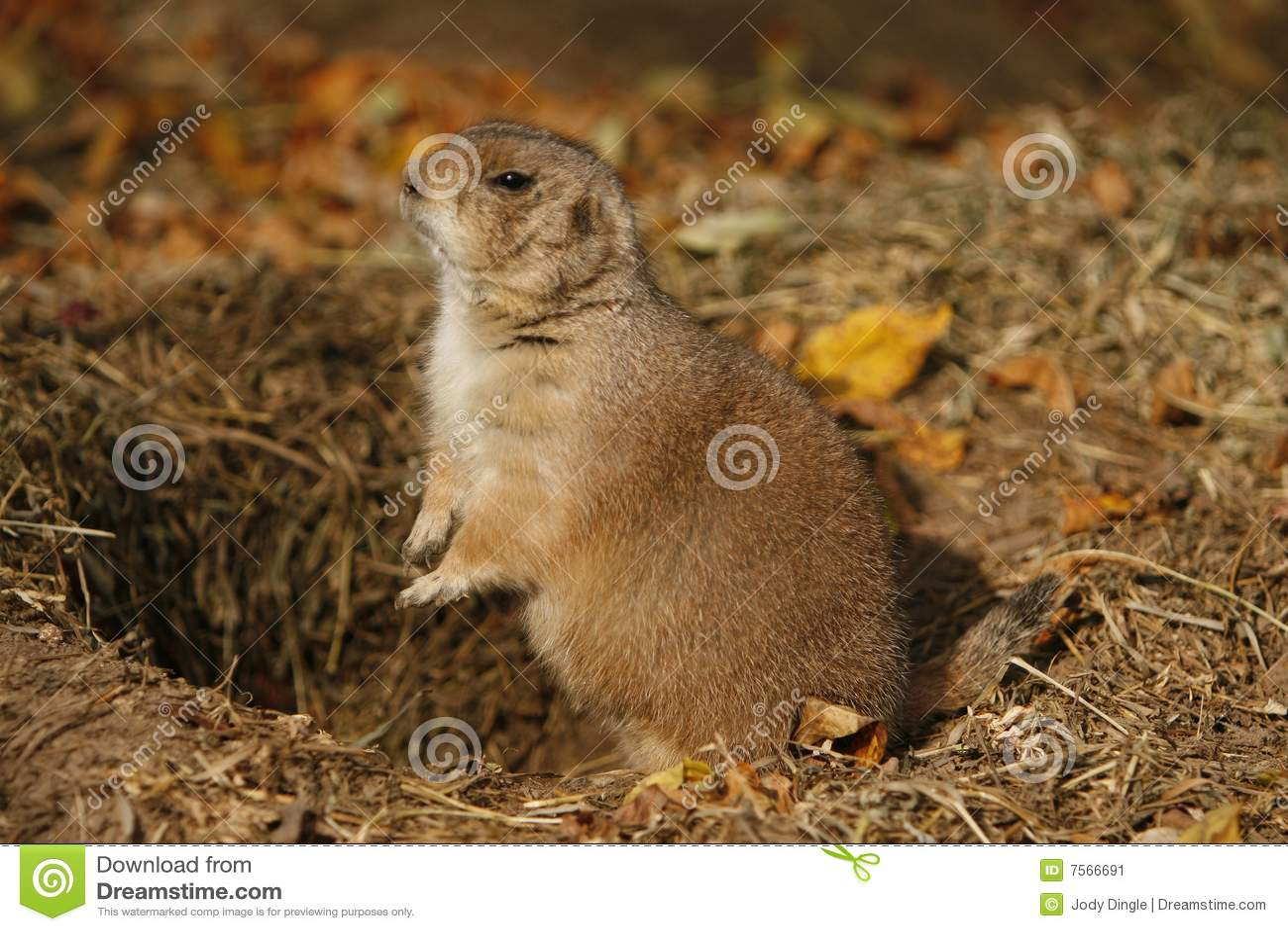 土拨鼠大叫表情动图_土拨鼠大叫表情动图的可爱图动表情包gif图片