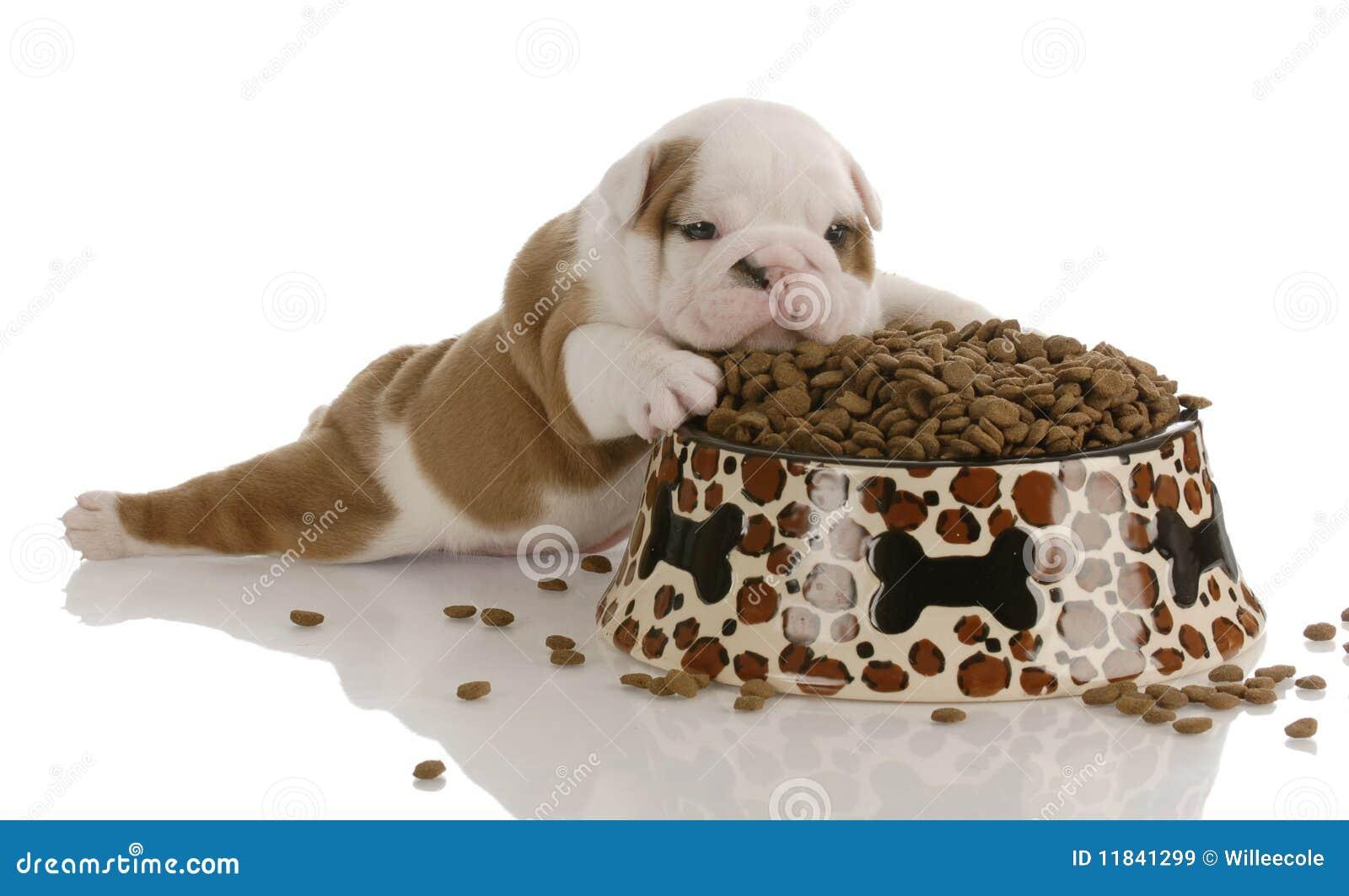 碗食物大小狗