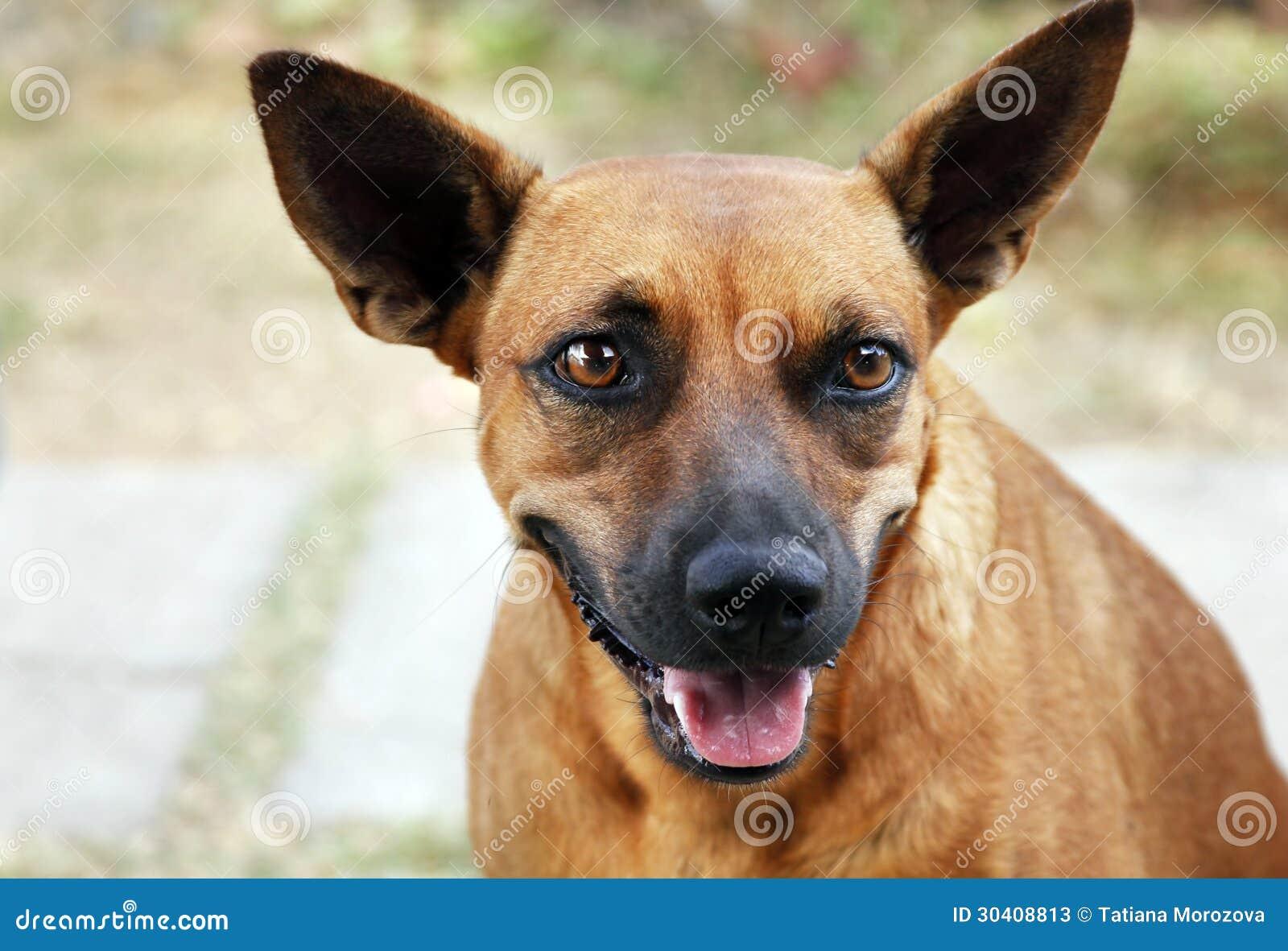 与微笑的狗在.