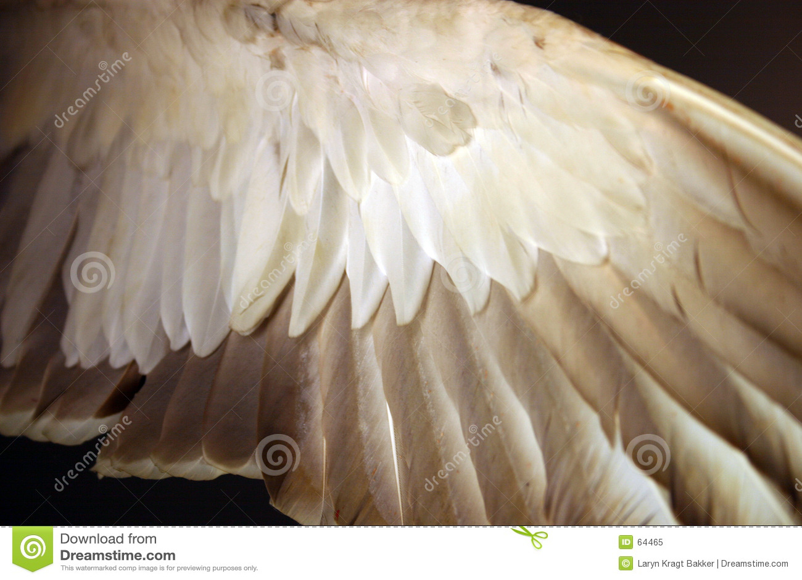 Download άγγελος κάτω από το φτερό &phi Στοκ Εικόνα - εικόνα από πτηνά, πρασινολαίμης: 64465