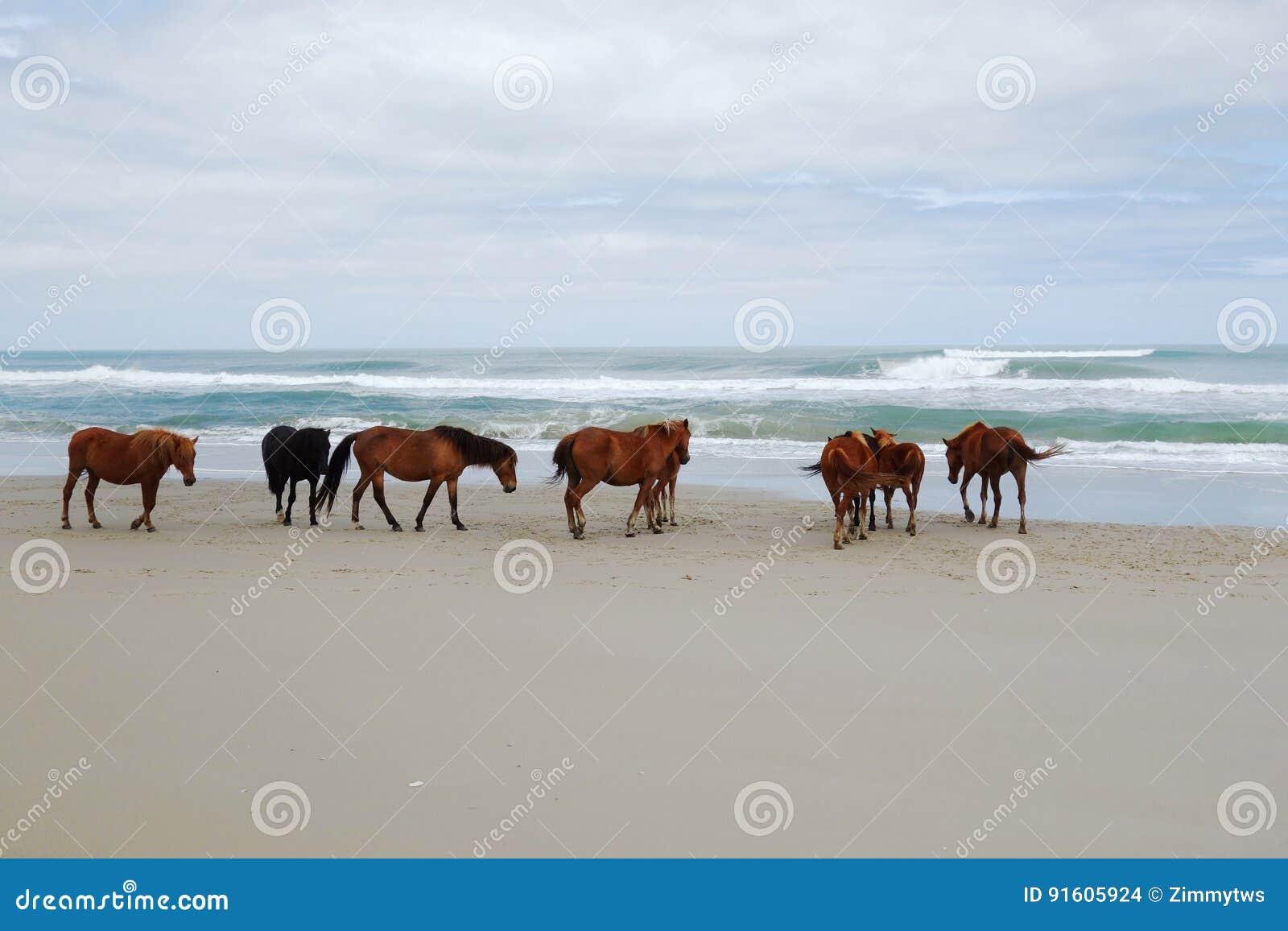 Άγρια άλογα Corolla