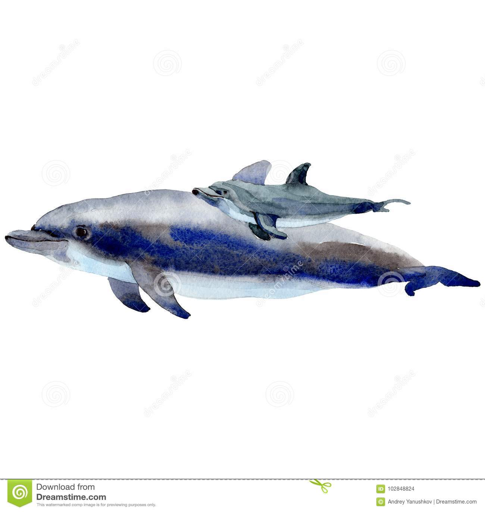 Άγρια θηλαστικά δελφινιών σε ένα ύφος watercolor που απομονώνεται