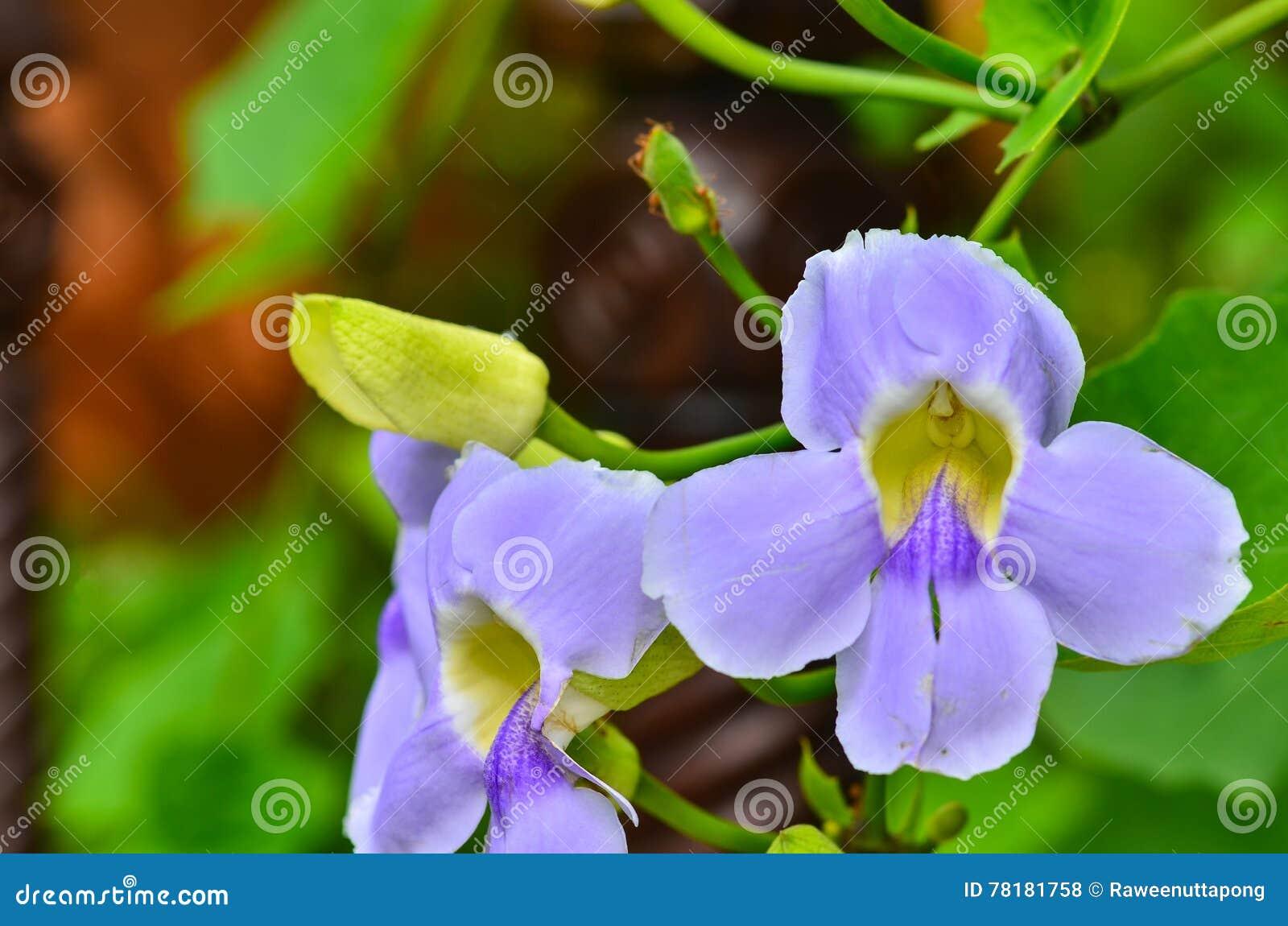 Άγρια λουλούδια βιολέτων άνοιξη