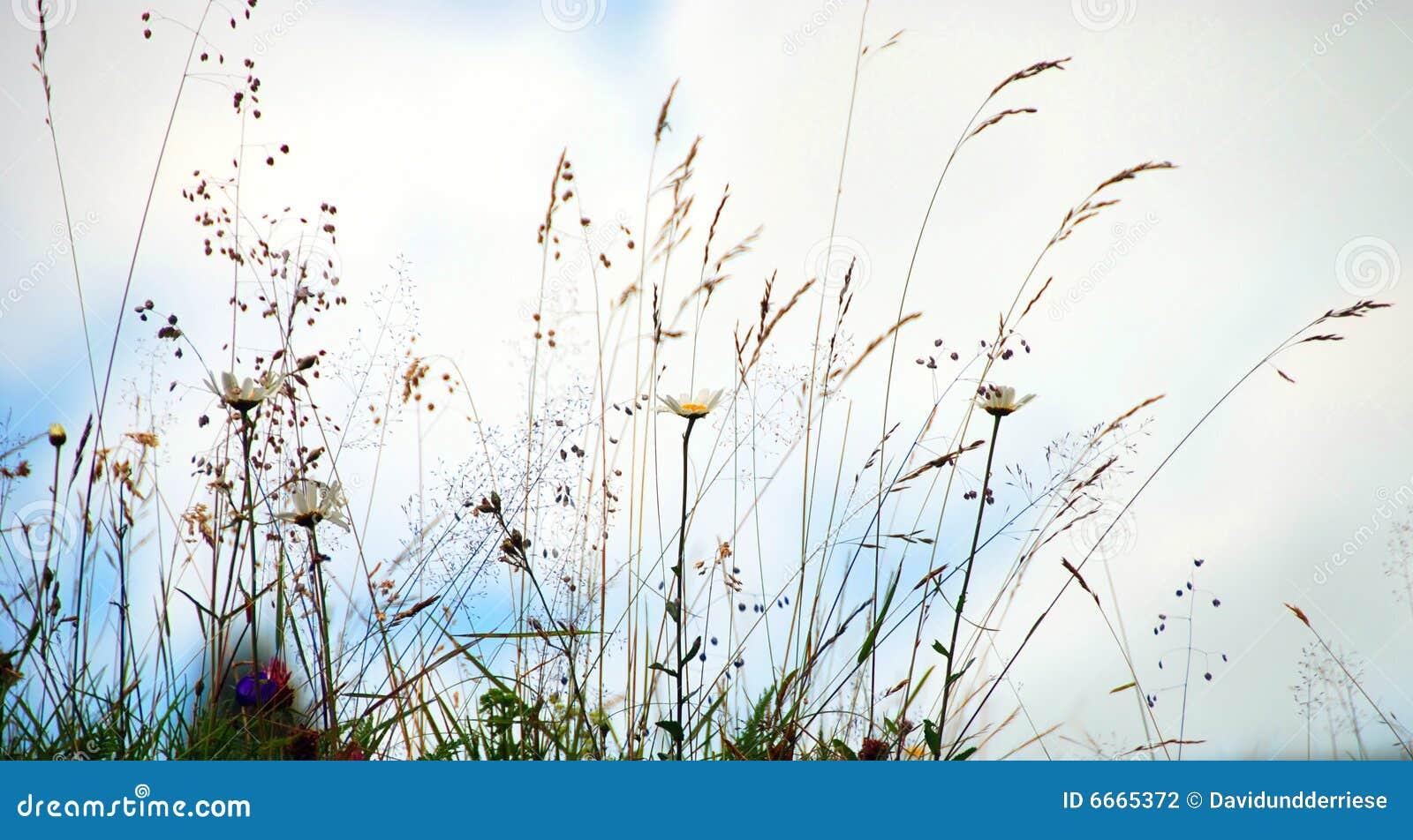 άγρια περιοχές λουλου&de