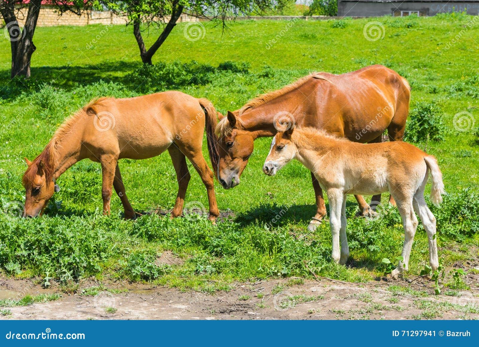 άγρια περιοχές φύσης ζωής οικογενειακών αλόγων