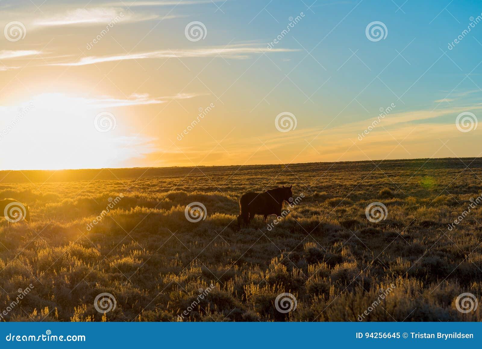 Άγριος φυσικός βρόχος αλόγων, Ουαϊόμινγκ