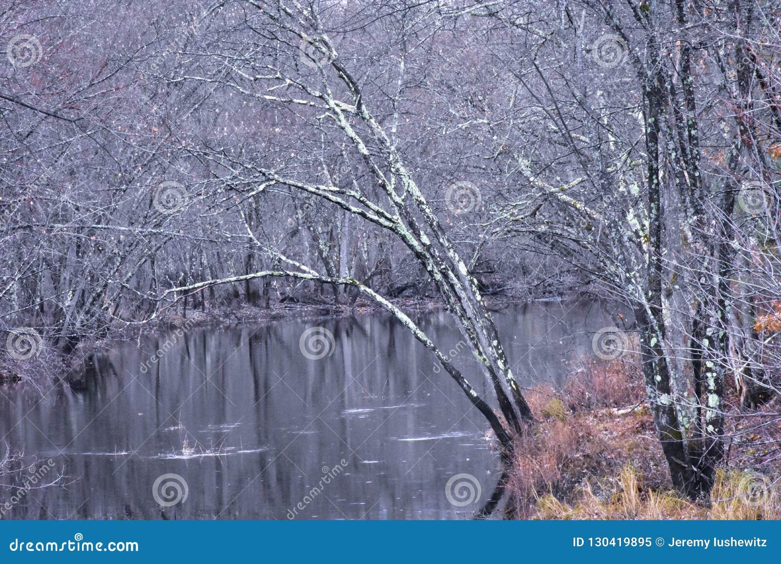 Άδεια λιγότερα δέντρα που παρουσιάζουν μεταβαλλόμενες εποχές