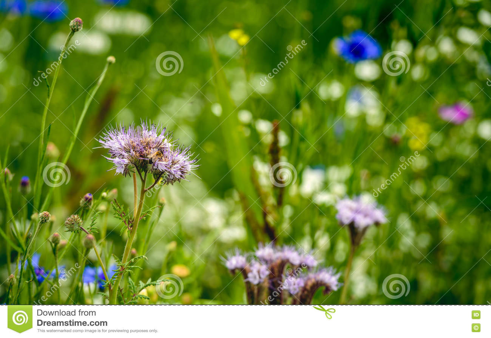 Άκρη τομέων για να υποστηρίξει τη συντήρηση της βιοποικιλότητας