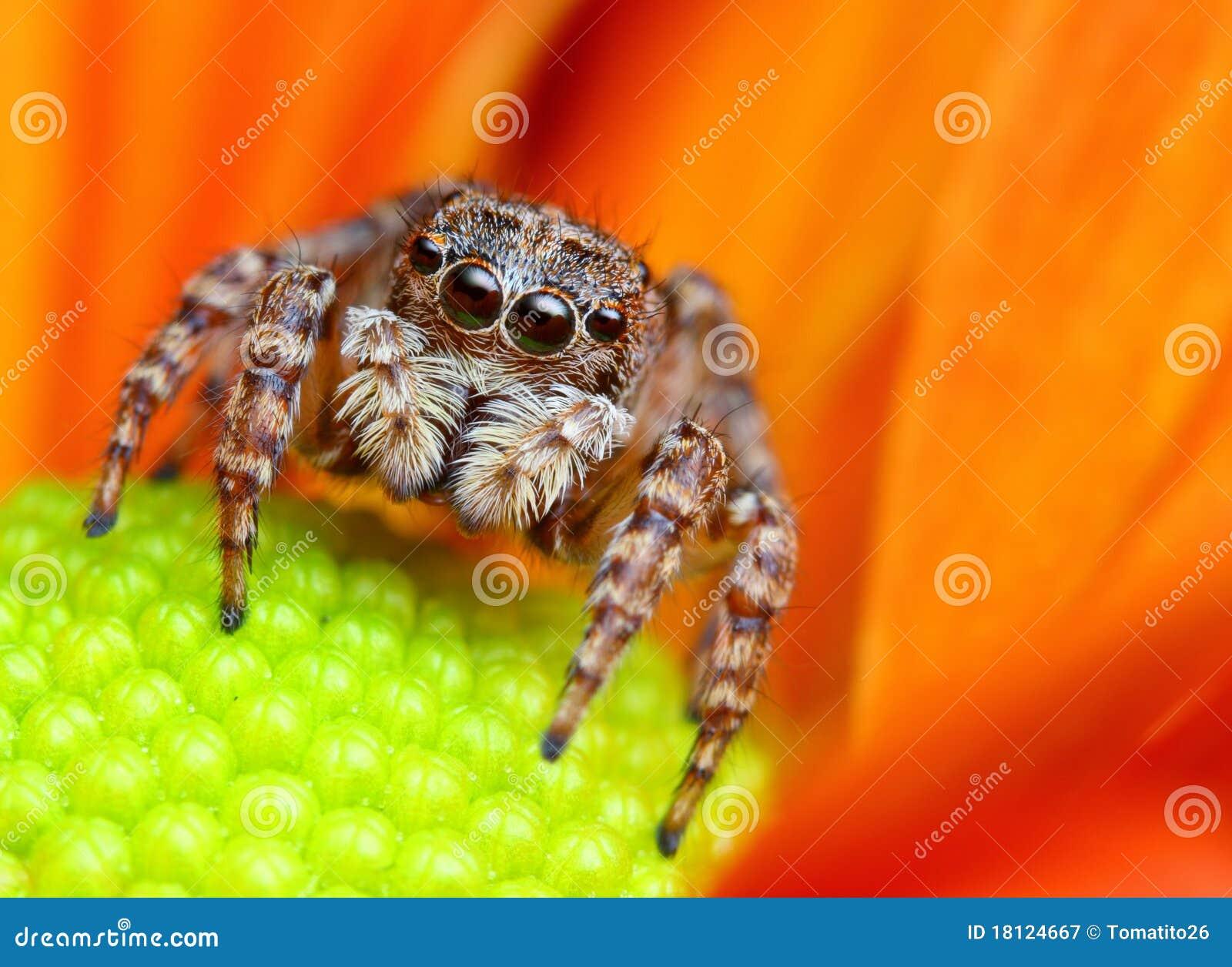 άλμα της αράχνης Τουρκία