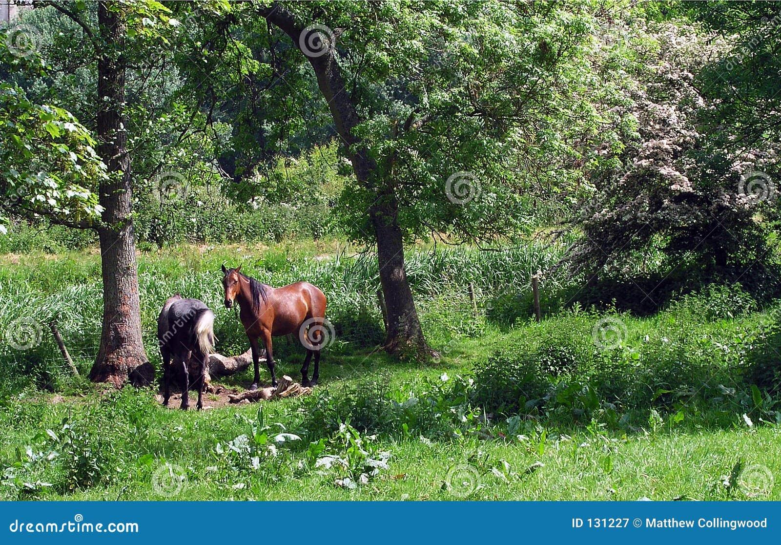 άλογα δύο