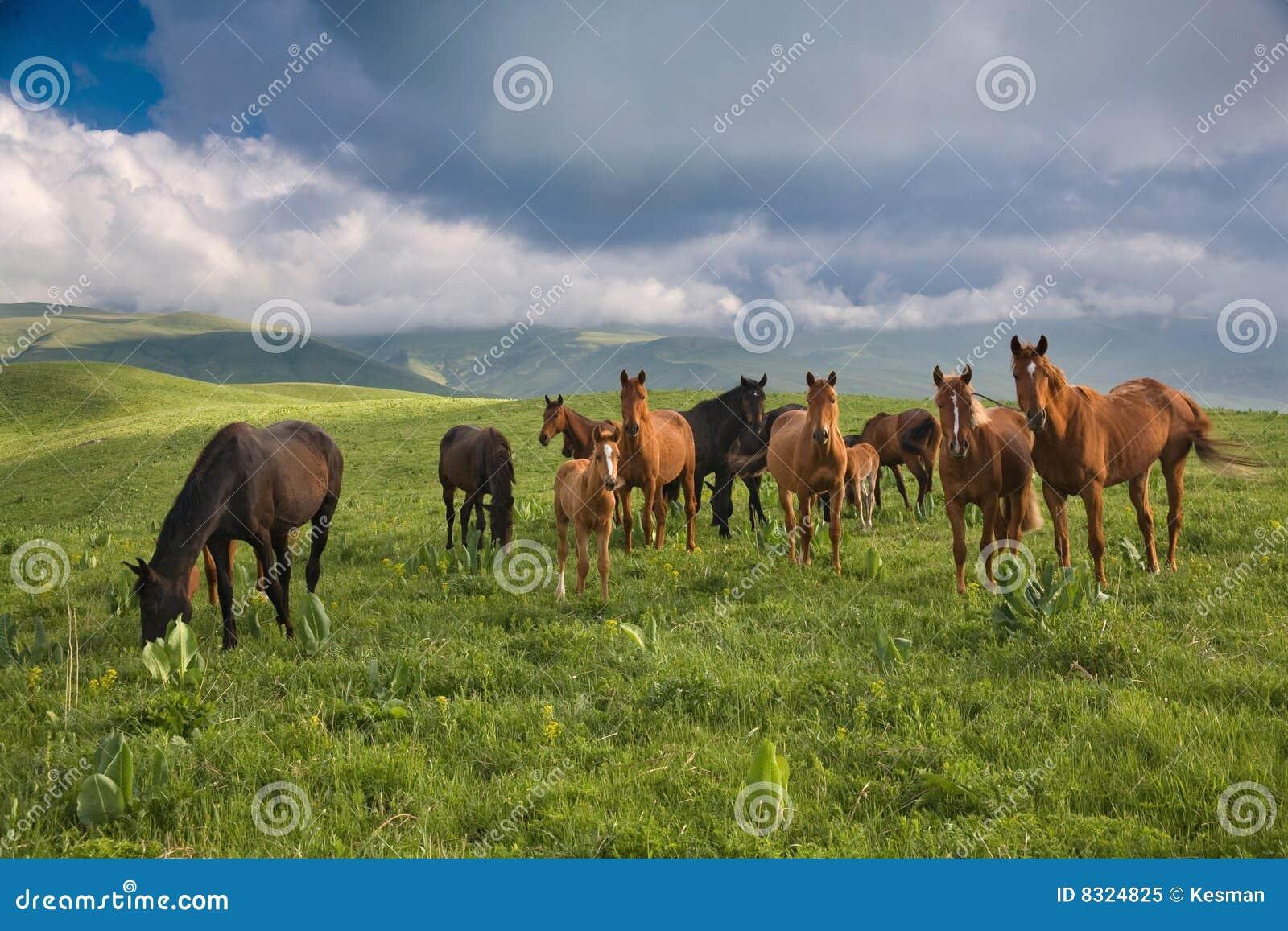 άλογα κοπαδιών