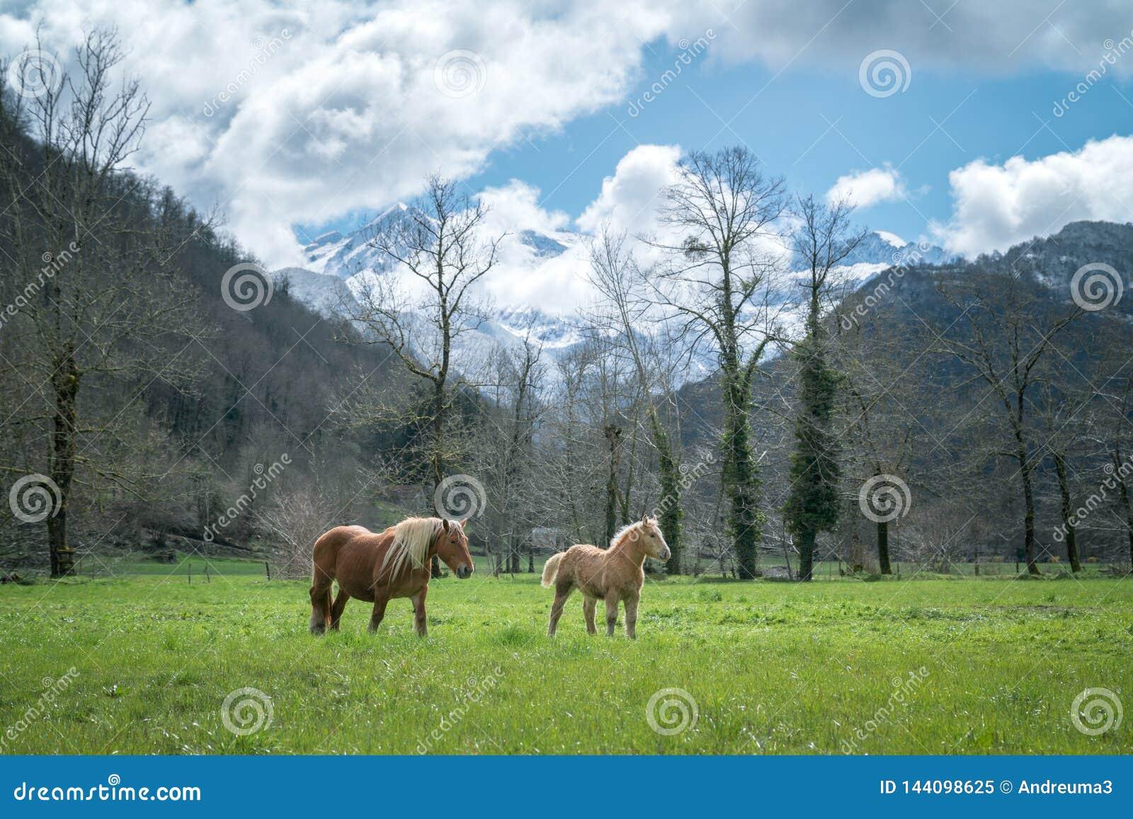 Άλογα στο λιβάδι
