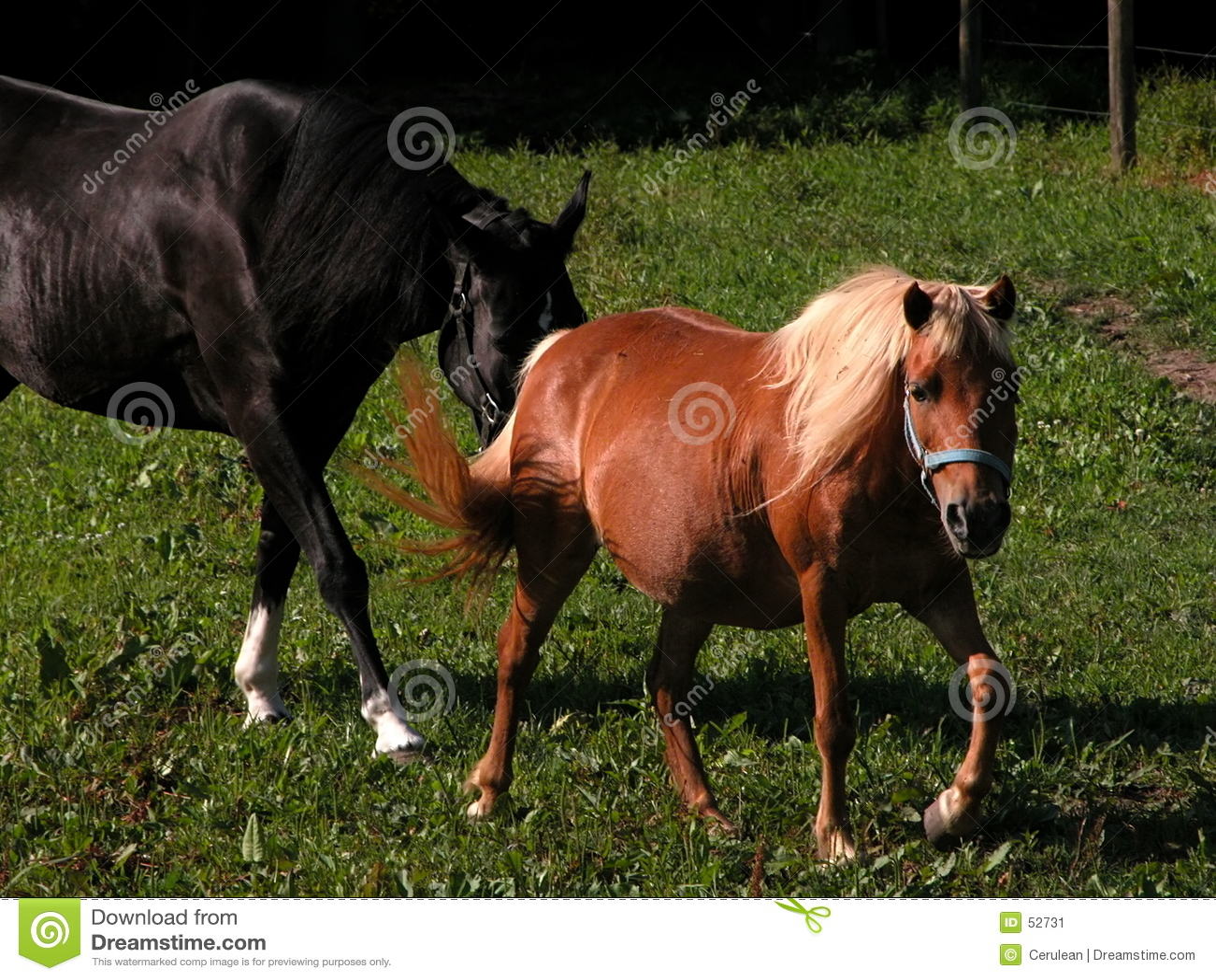Download άλογα στοκ εικόνα. εικόνα από μπάρμαν, horseback, οδήγηση - 52731