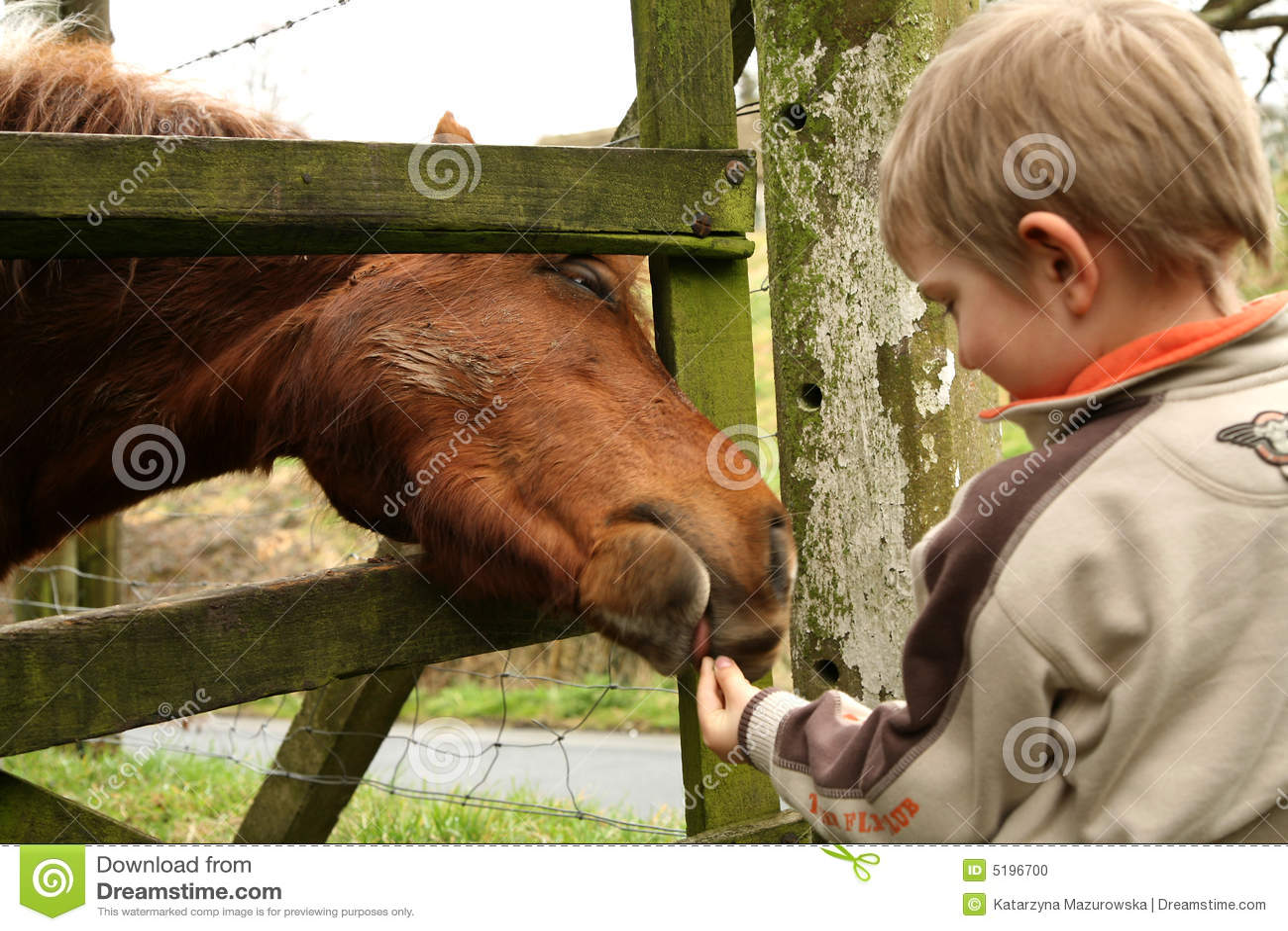 άλογο αγοριών λίγα