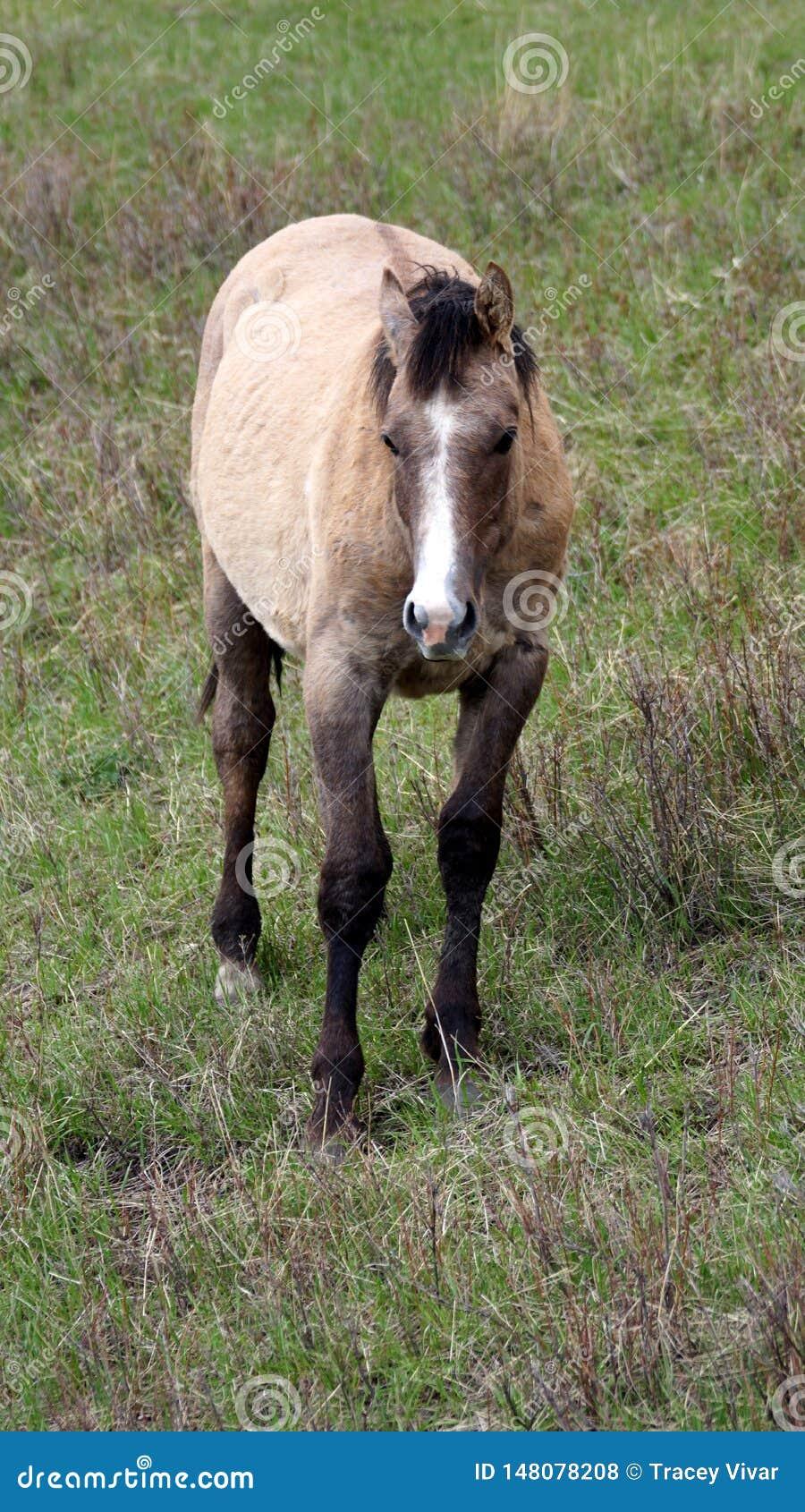 Άλογο κόλπων σε ένα λιβάδι