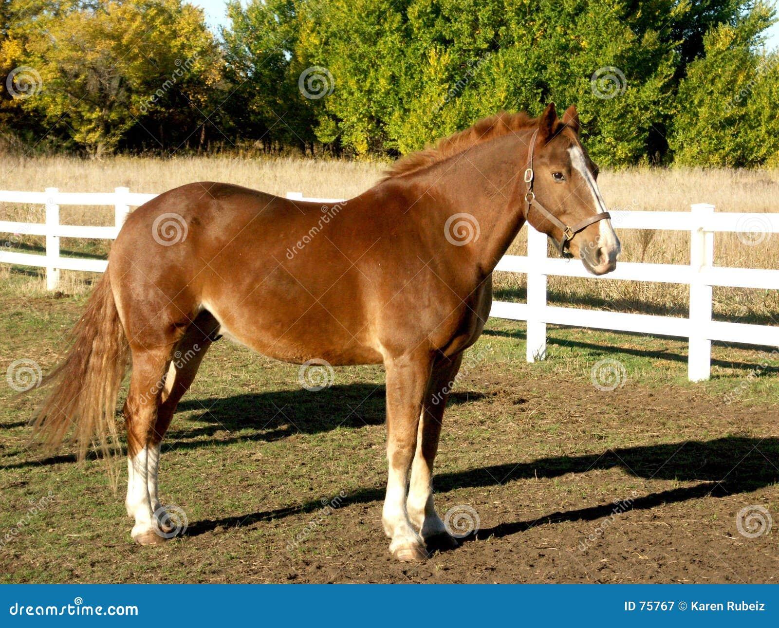 άλογο μεγαλοπρεπές