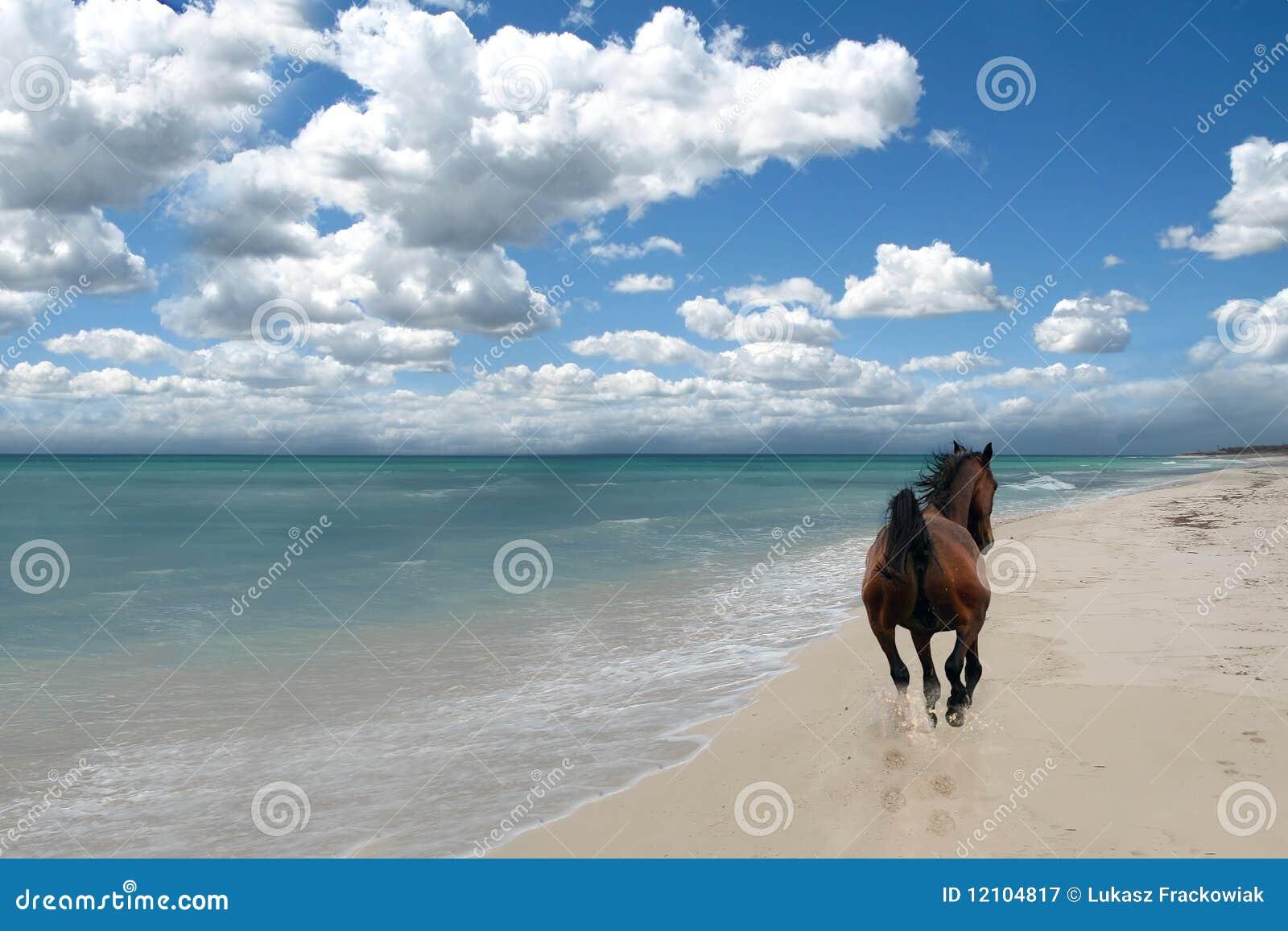 άλογο παραλιών