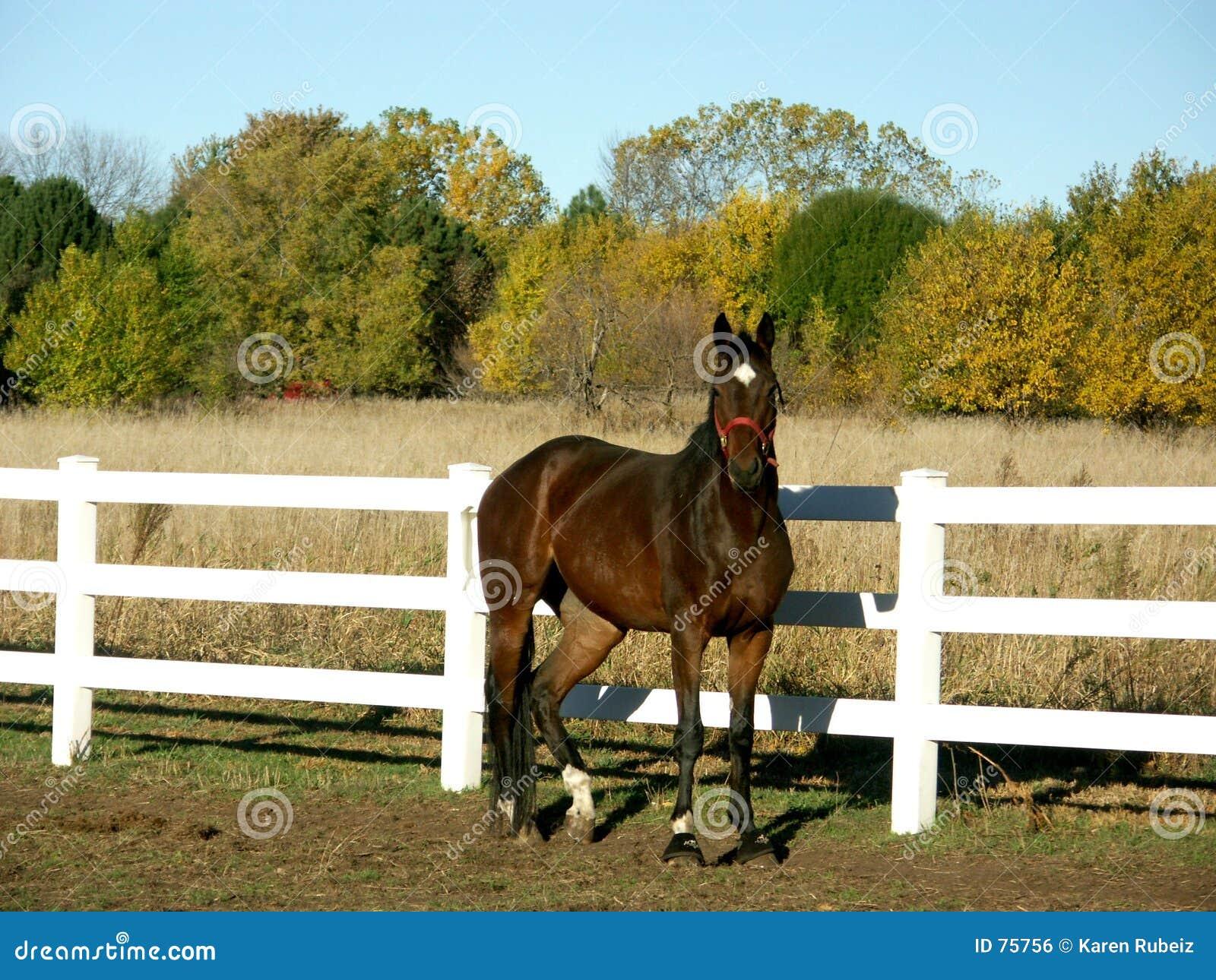 άλογο πεδίων πτώσης