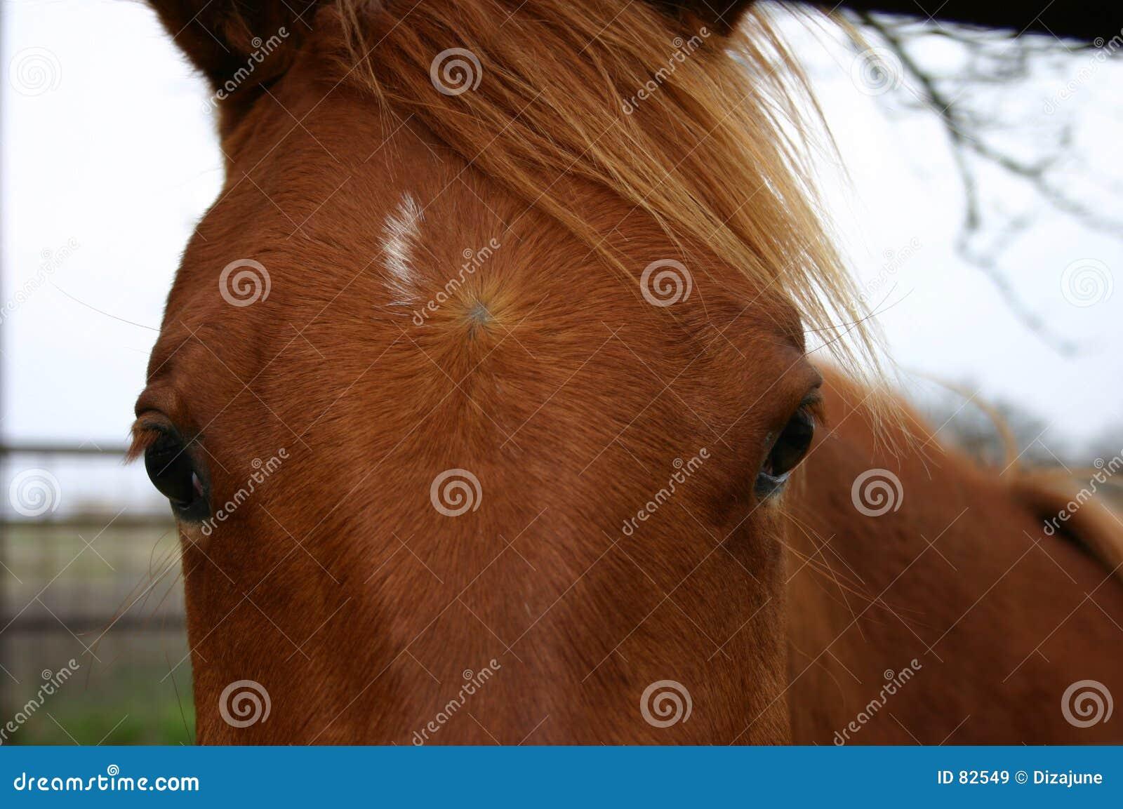 άλογο προσώπου