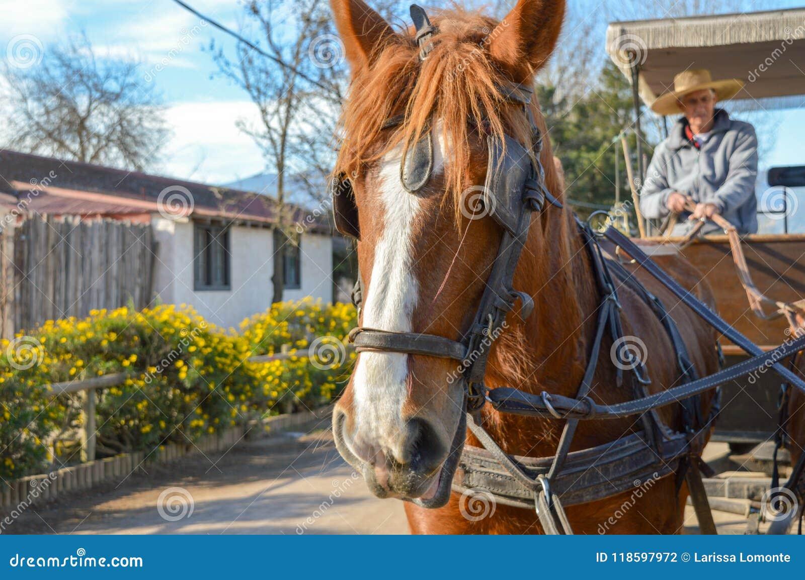 Άλογο στον αμπελώνα στην Αργεντινή