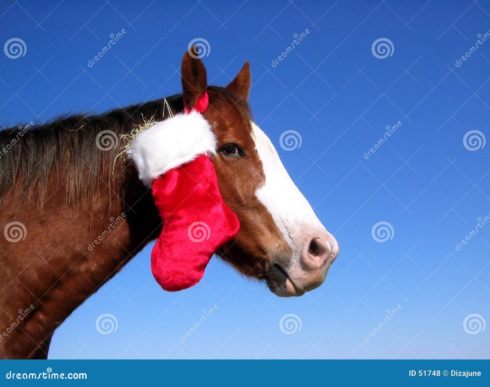 Download άλογο Χριστουγέννων στοκ εικόνες. εικόνα από φέρτε, σανός - 51748