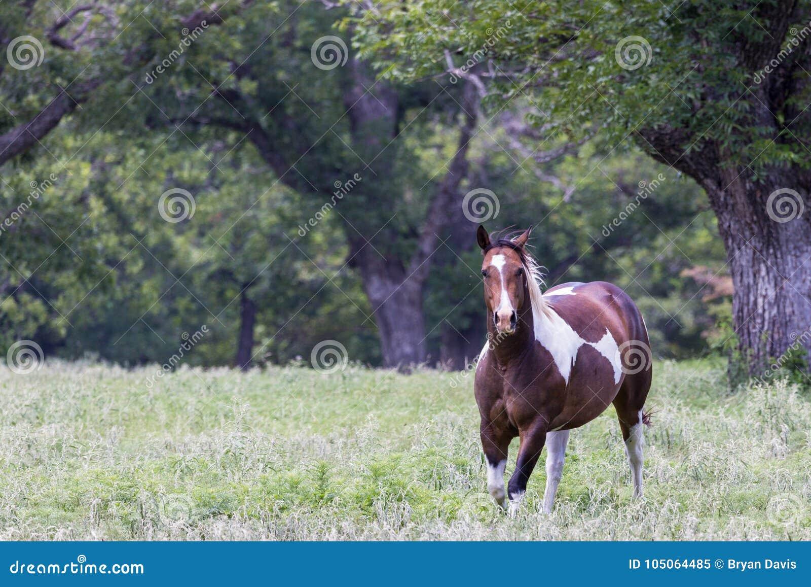 Άλογο χρωμάτων που τρέχει σε ένα λιβάδι