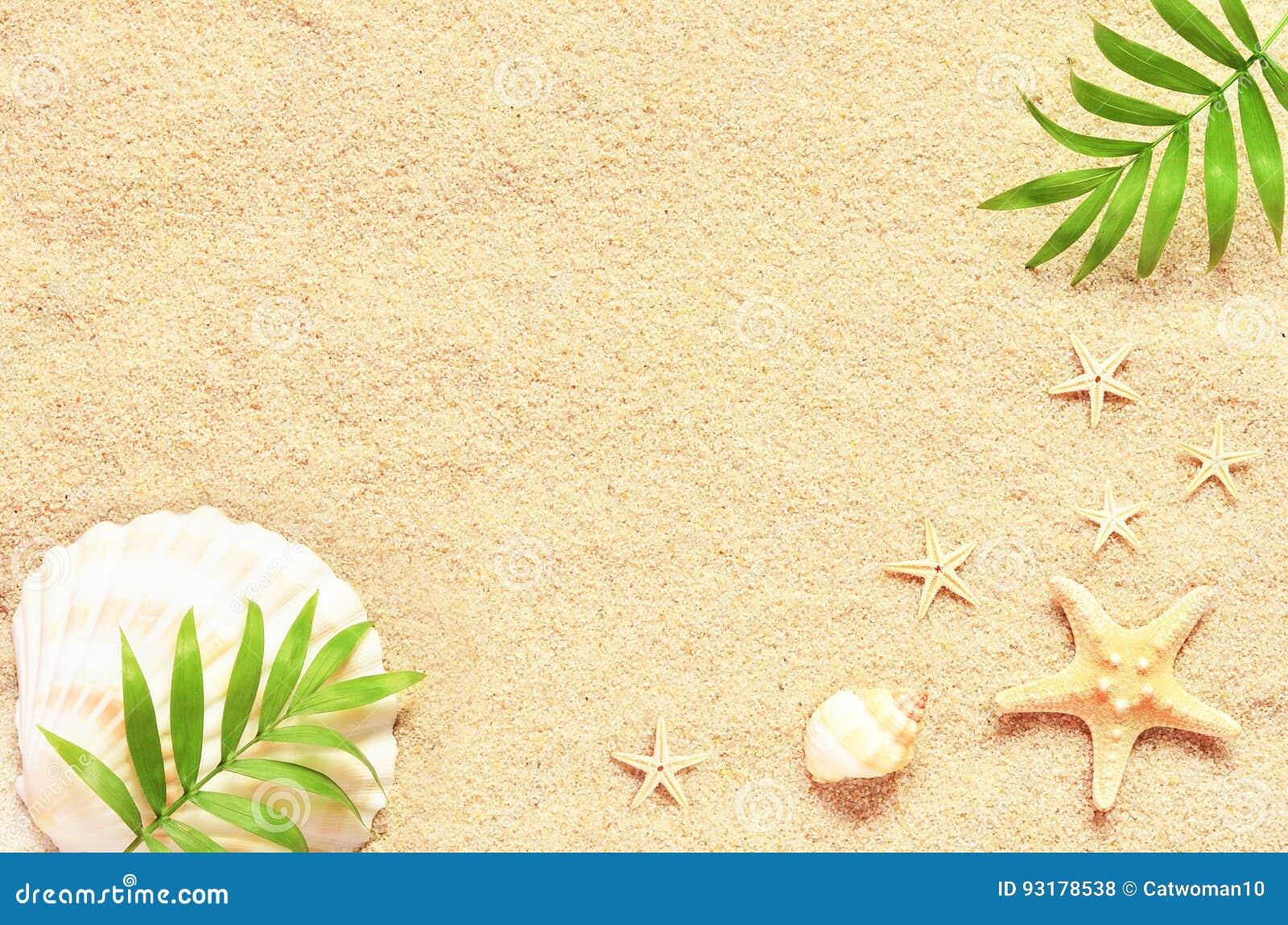 Άμμος θάλασσας με τον αστερία και τα κοχύλια Τοπ άποψη με το διάστημα αντιγράφων