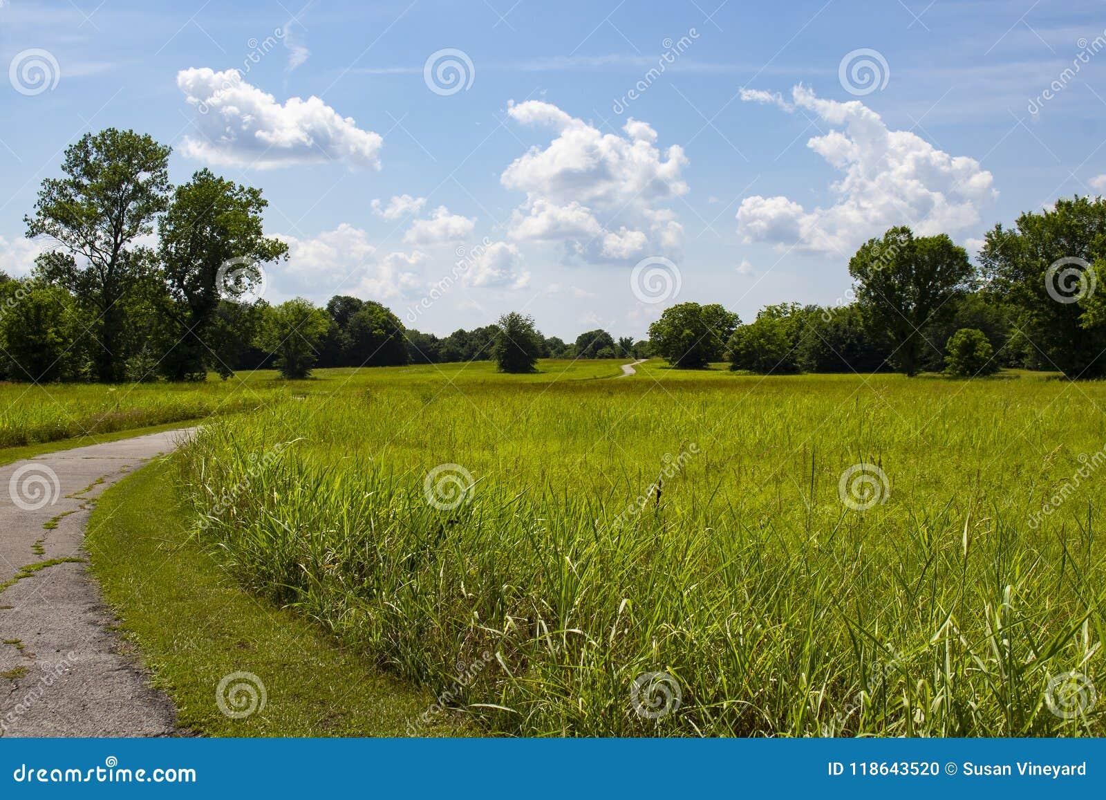 Άνεμος καμπύλες πορειών μέσω του λιβαδιού της χλόης και από τα πράσινα δέντρα και επάνω πέρα από το λόφο όλα κάτω από τον όμορφο