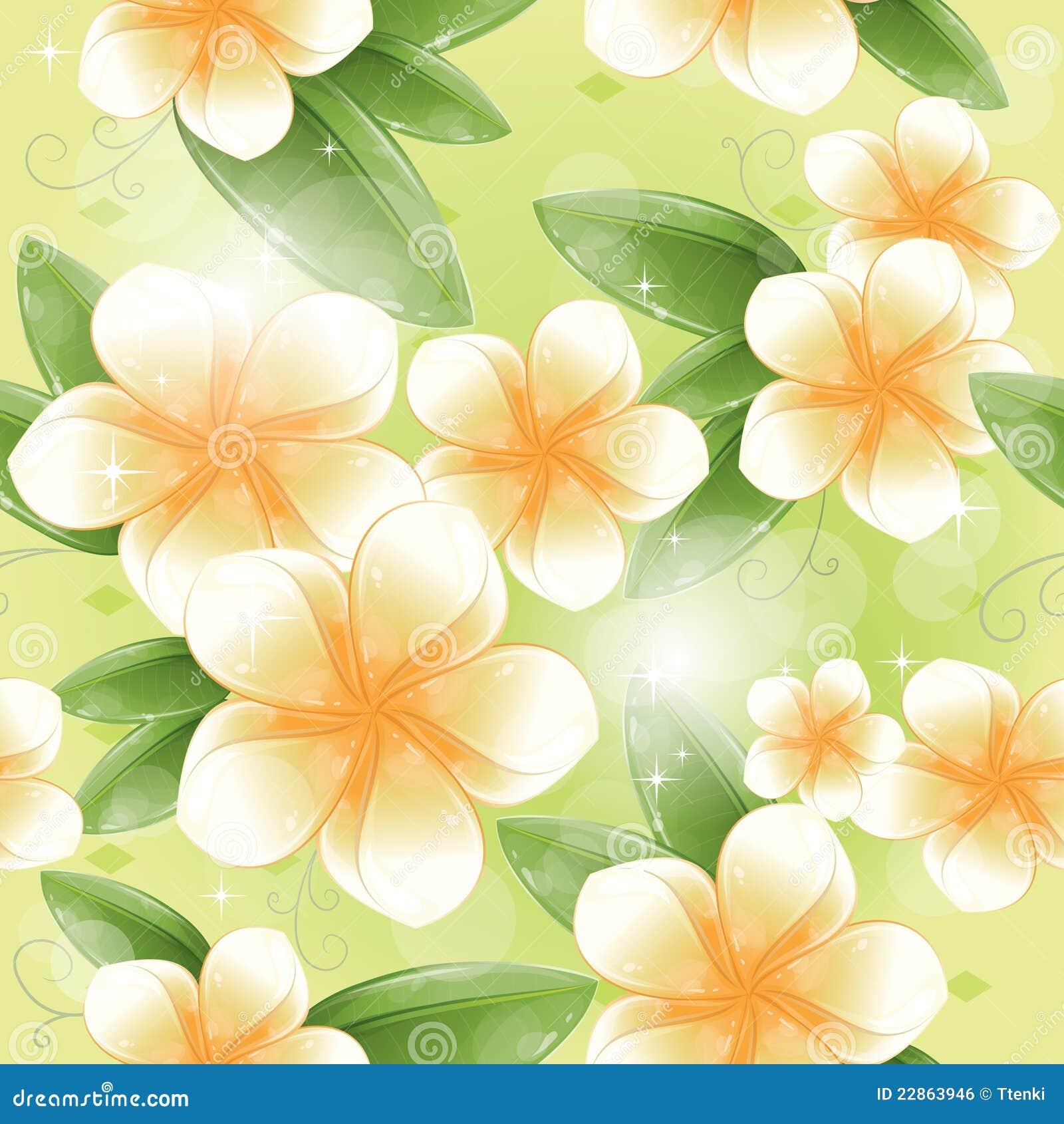 Άνευ ραφής πρότυπο - άσπρα λουλούδια frangipani