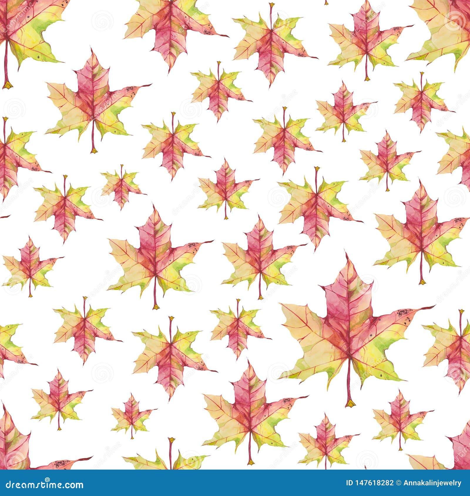Άνευ ραφής σχέδιο με τα φύλλα σφενδάμου watercolor στο άσπρο υπόβαθρο