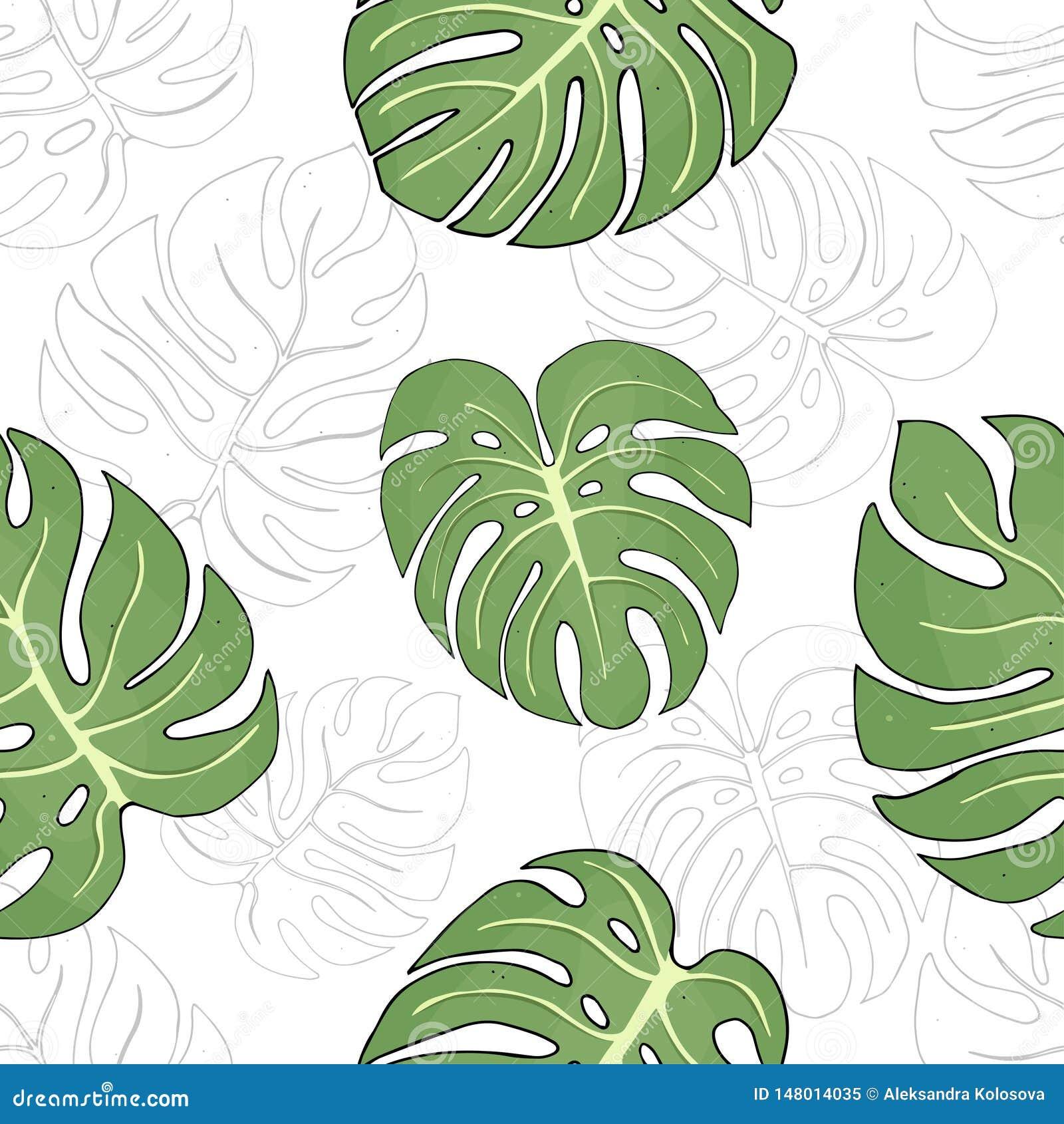 Άνευ ραφής σχέδιο με τα φύλλα των τροπικών φυτών Monstera