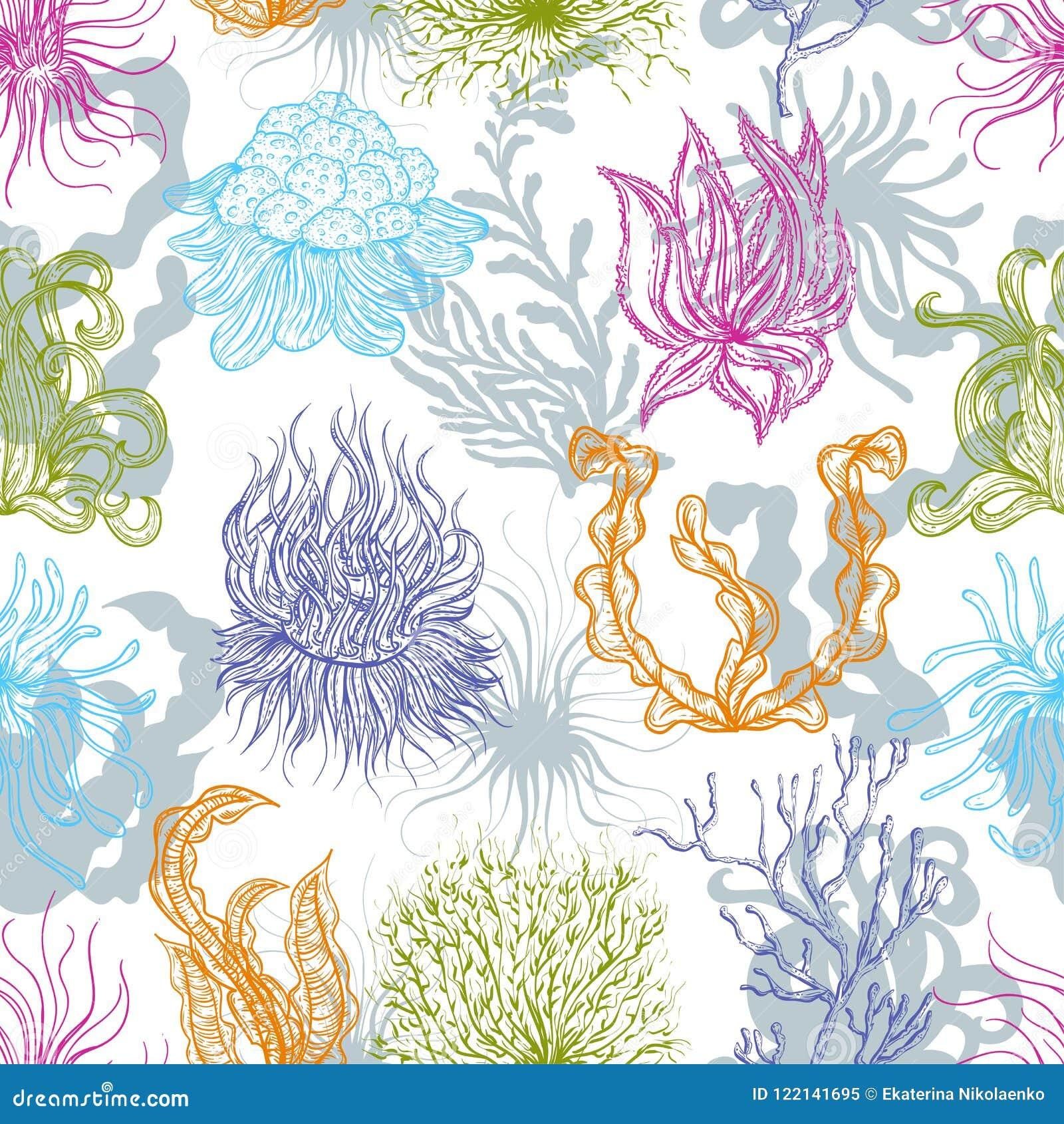 Άνευ ραφής σχέδιο με τις θαλάσσια εγκαταστάσεις, τα κοράλλια και το φύκι