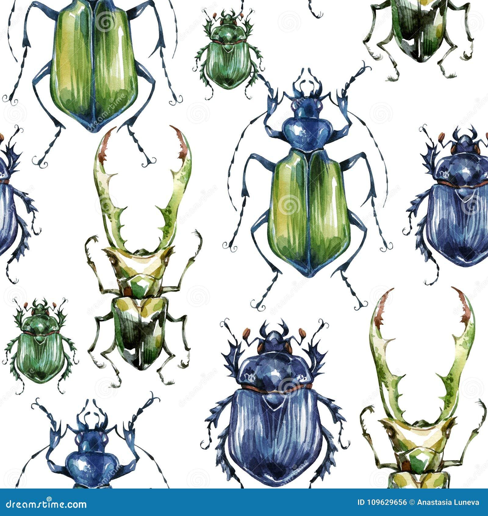 Άνευ ραφής σχέδιο με τους ζωηρόχρωμους κανθάρους Υπόβαθρο καλοκαιριού και άνοιξης, απεικόνιση watercolor εντομολογία Σύνολο άγρια