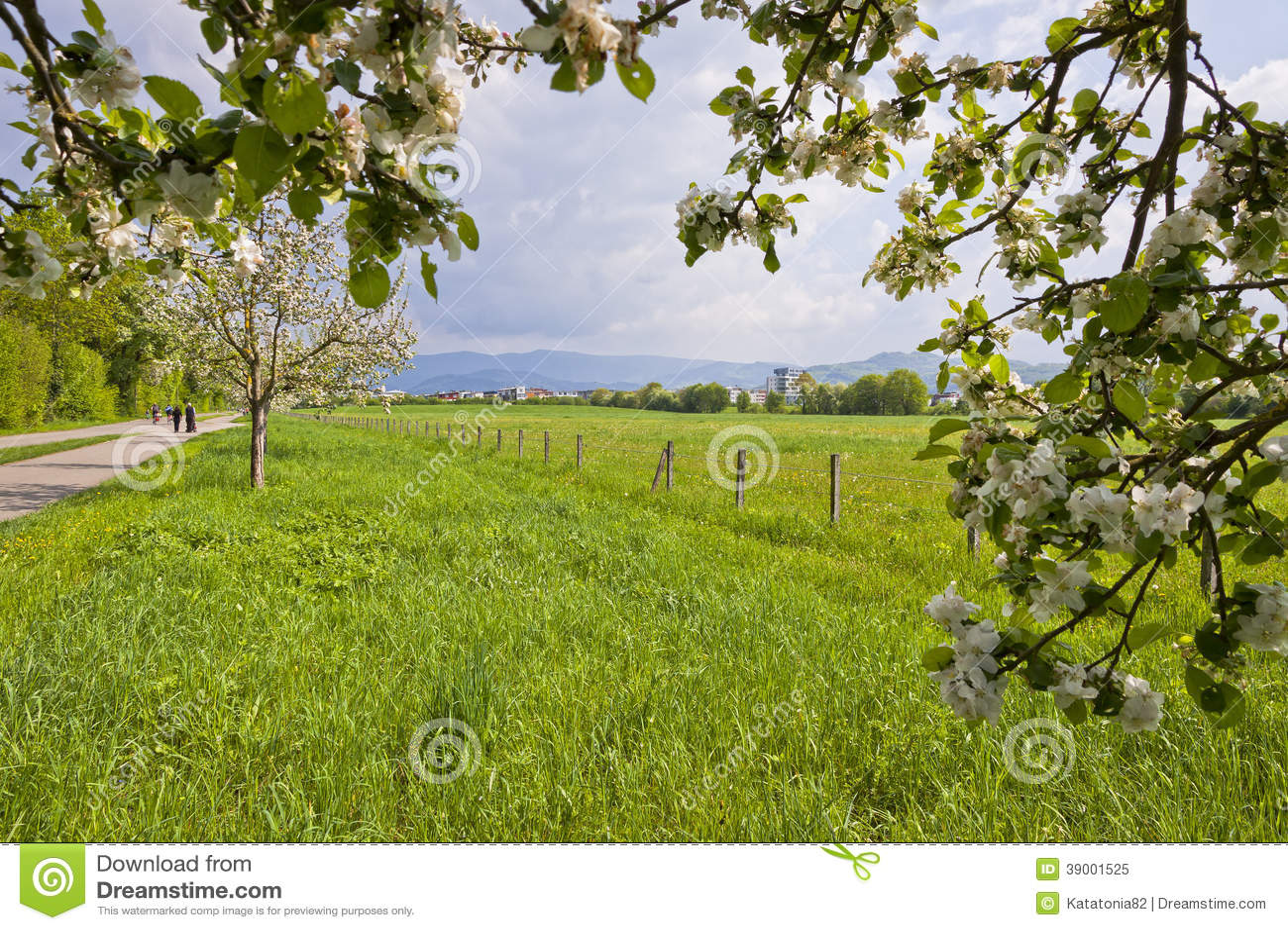 Άνθη άνοιξη των οπωρωφόρων δέντρων