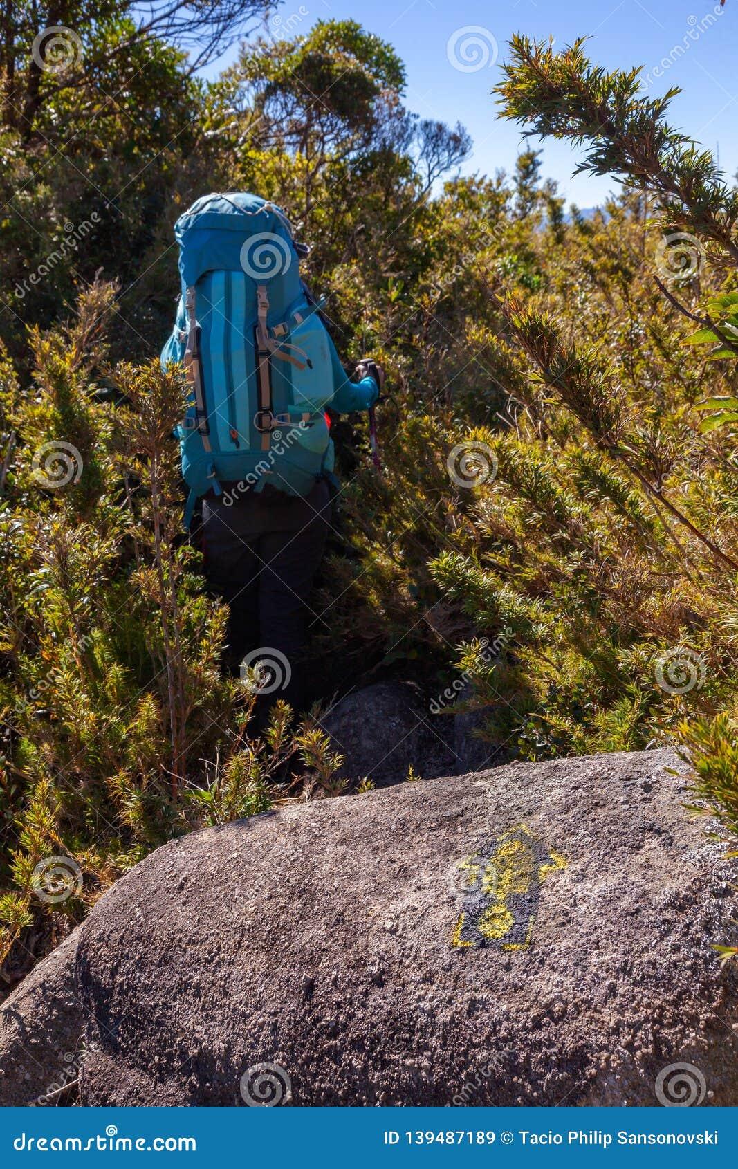 Άνθρωποι που περπατούν με τα μεγάλα σακίδια πλάτης στο τοπίο βουνών - πεζοπορίας οδοιπορίας στη σειρά Βραζιλία mantiqueira