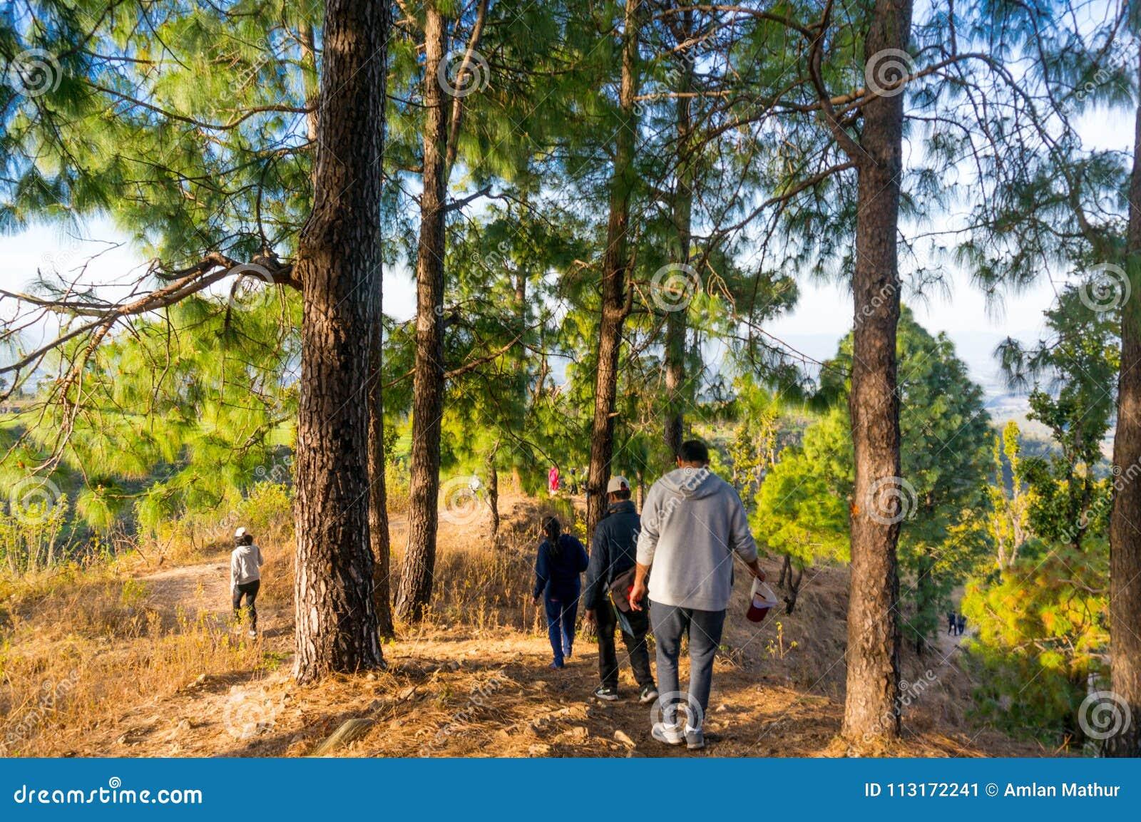 Άνθρωποι που στα ξύλα dehradun πλησίον Ινδία