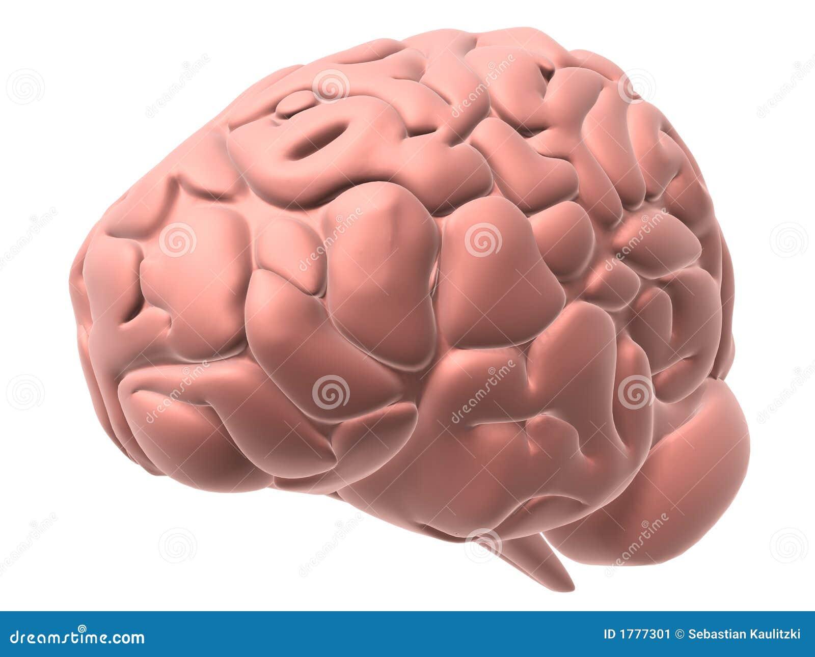 άνθρωπος εγκεφάλου