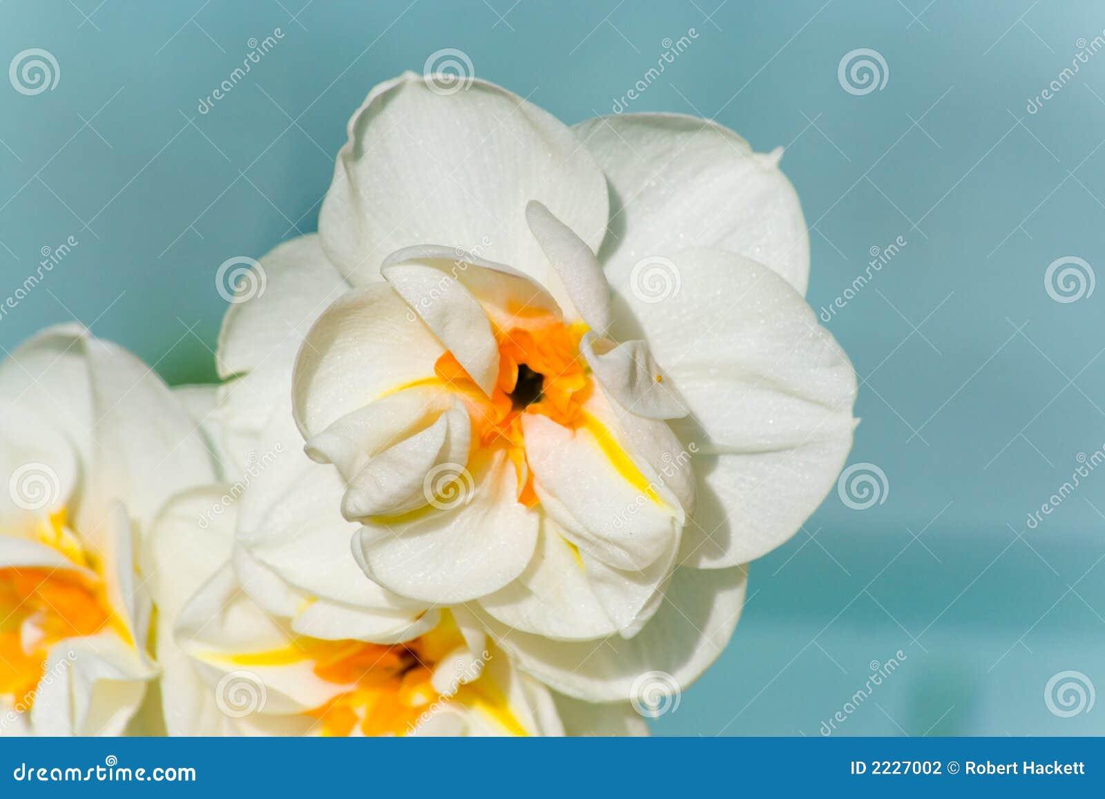 άνοιξη 3 λουλουδιών