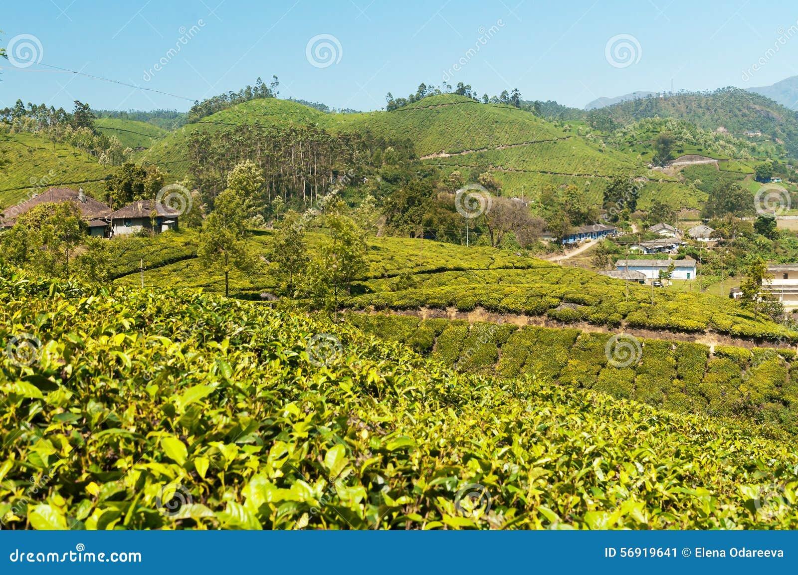 Άποψη της κοιλάδας φυτειών τσαγιού σε Munnar