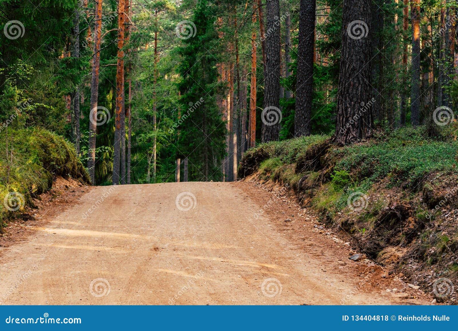 Άποψη του δασικού δρόμου, τίτλος βαθύτερος στα ξύλα
