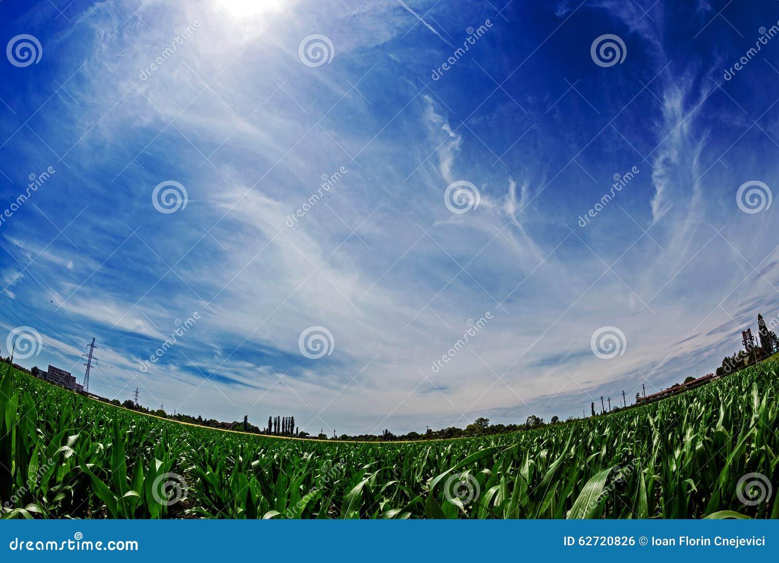 Άποψη Fisheye cornfield