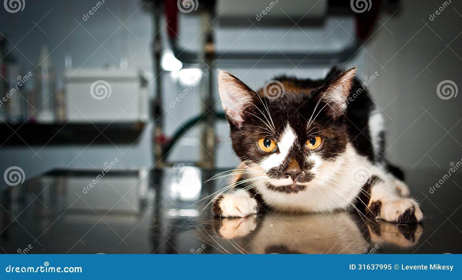 Άρρωστη γάτα στον κτηνίατρο