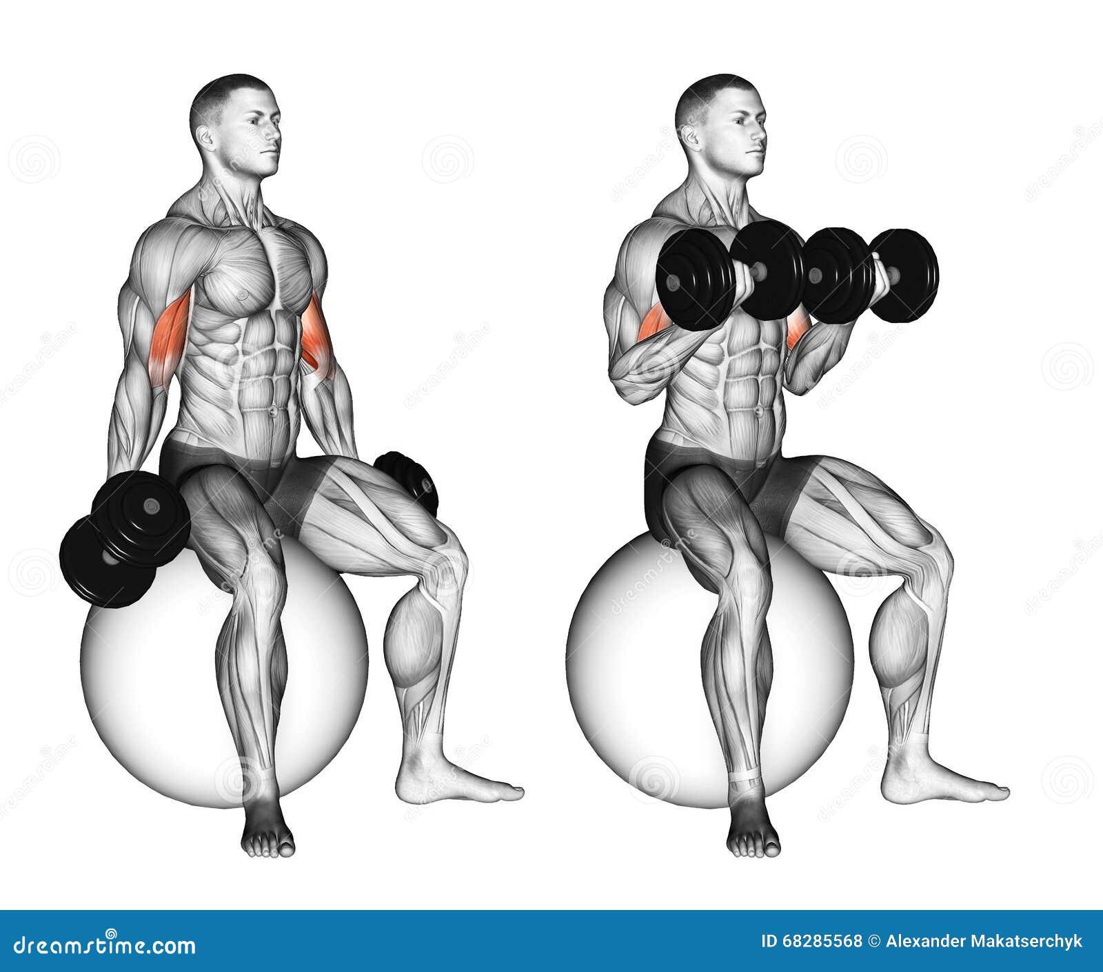 άσκηση Μπούκλες δικέφαλων μυών που κάθονται στη σφαίρα σταθερότητας