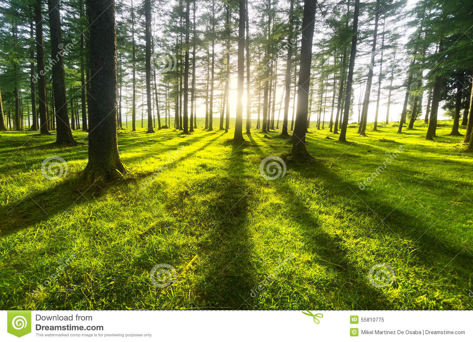 δάσος ηλιόλουστο