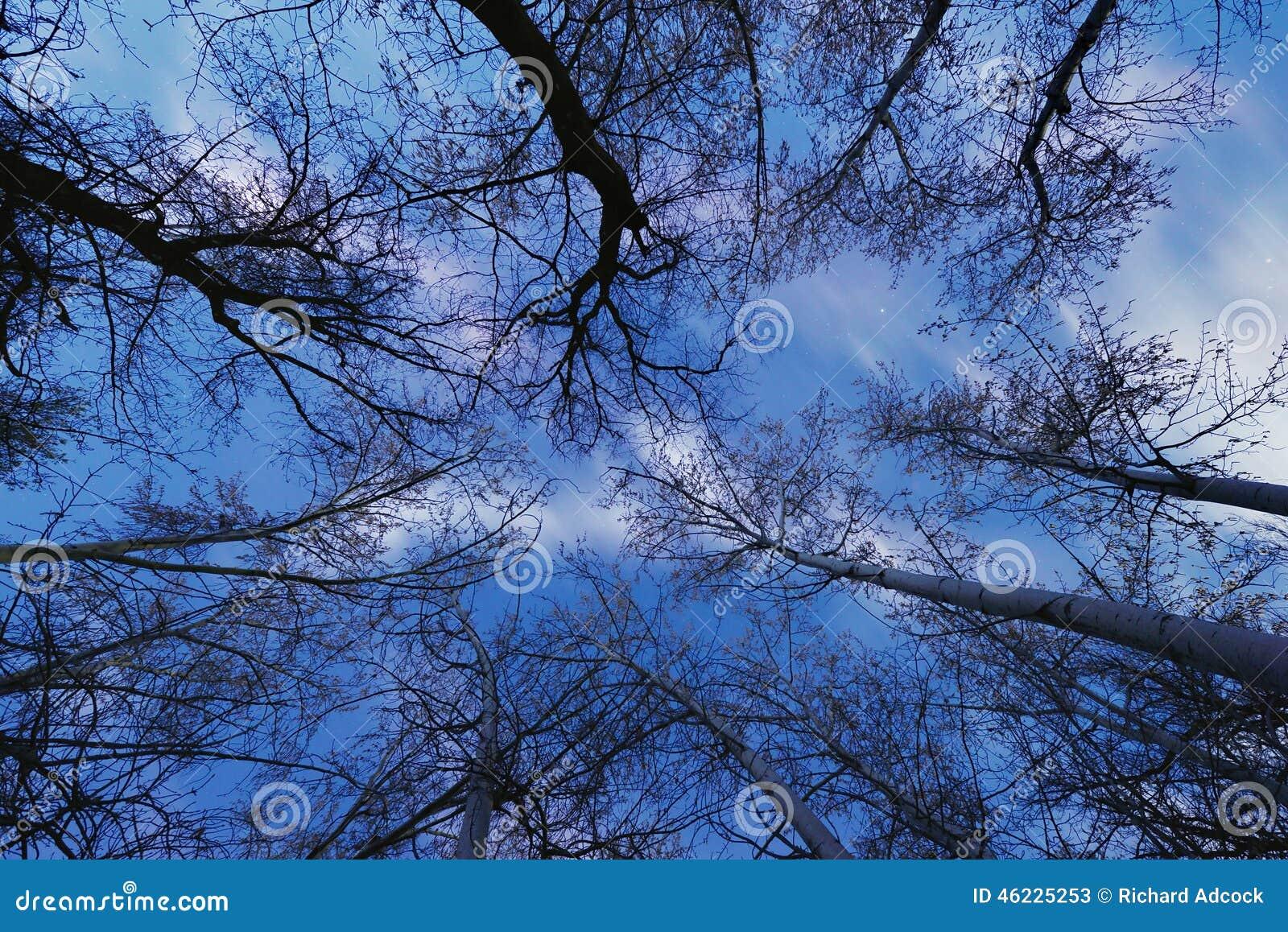 δάσος που συχνάζεται